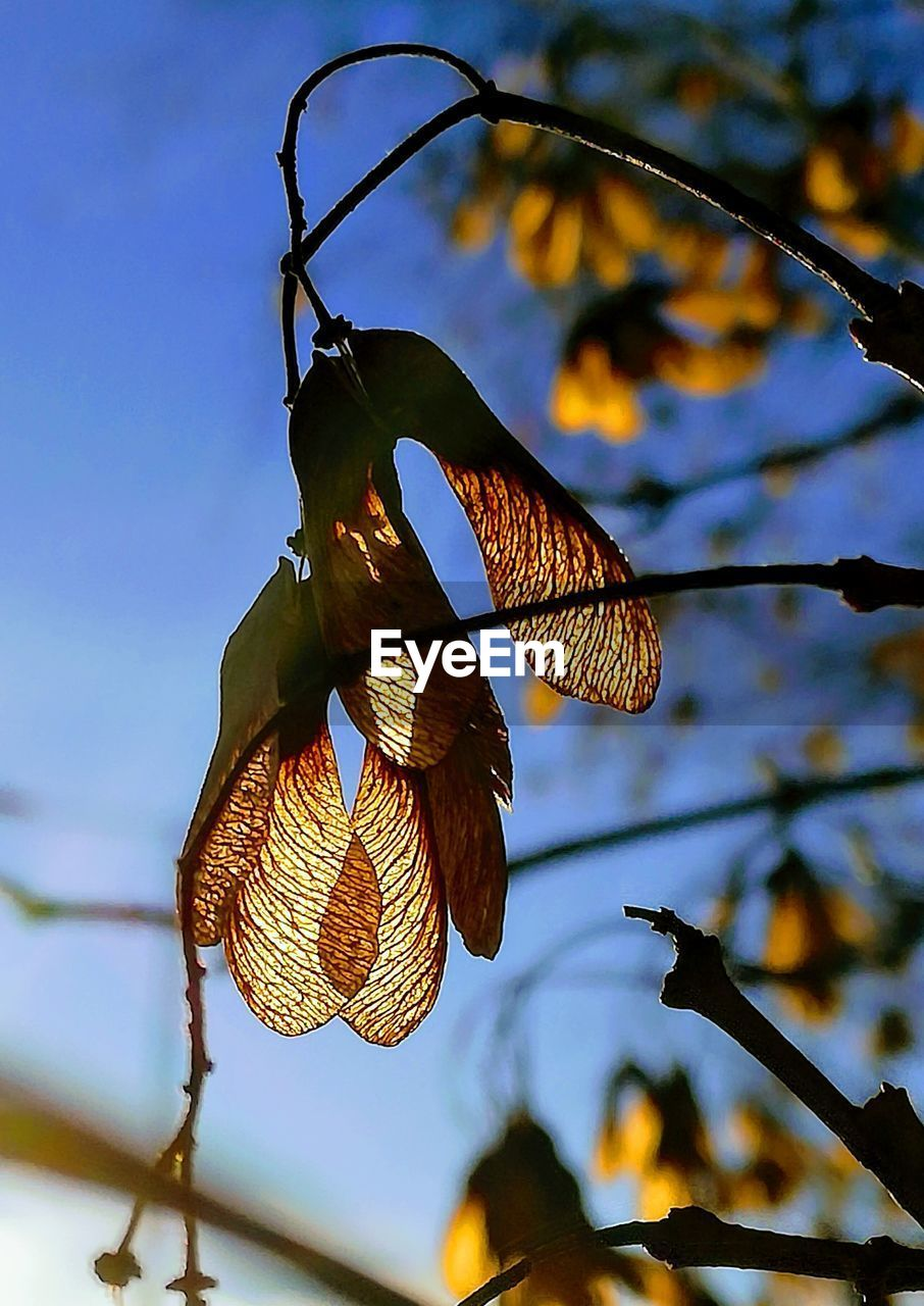 hanging, low angle view, no people, focus on foreground, leaf, day, outdoors, tree, branch, nature, sky, beauty in nature, close-up