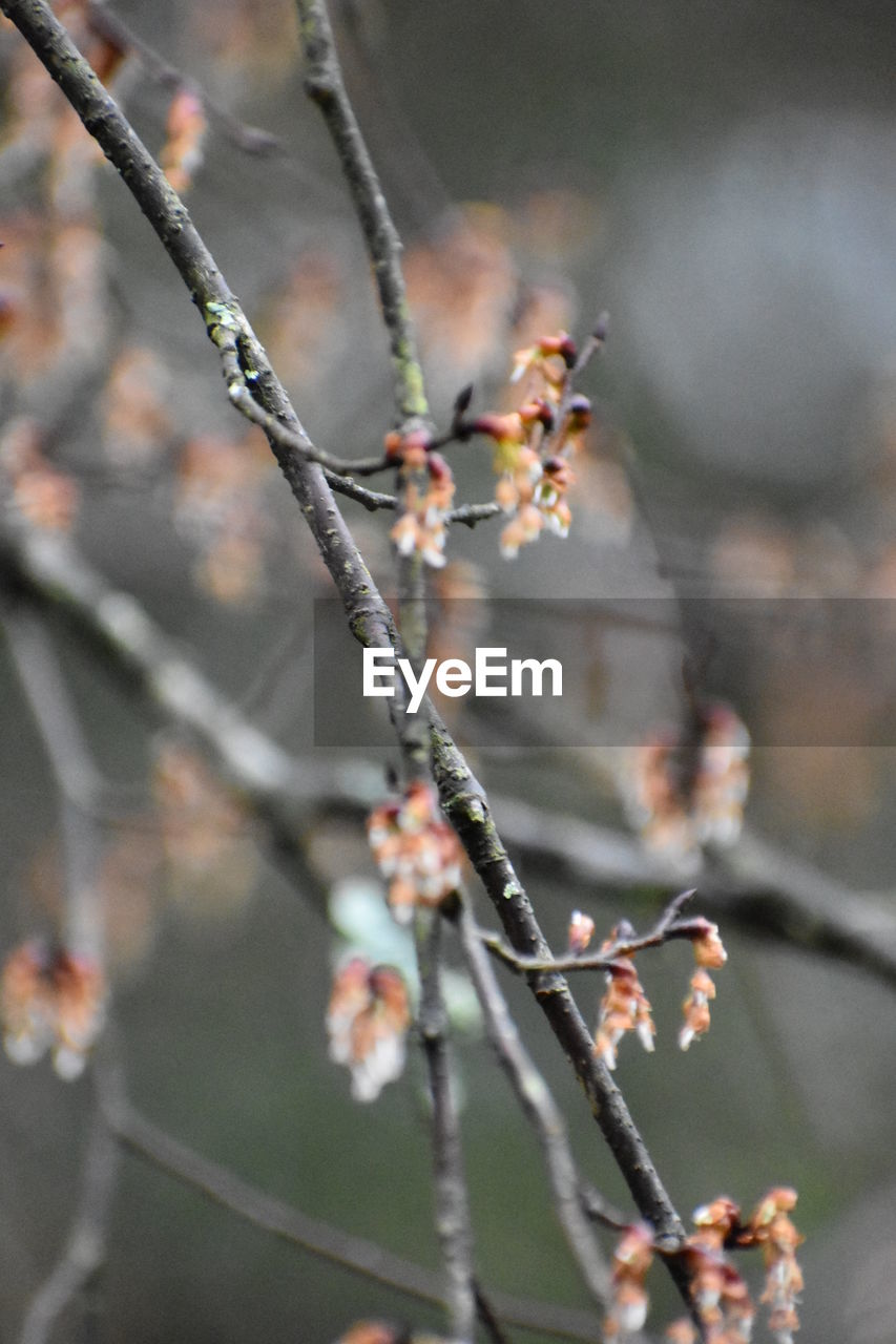 plant, close-up, growth, focus on foreground, beauty in nature, selective focus, flower, day, flowering plant, nature, no people, fragility, twig, vulnerability, branch, freshness, outdoors, tree, springtime, plant stem