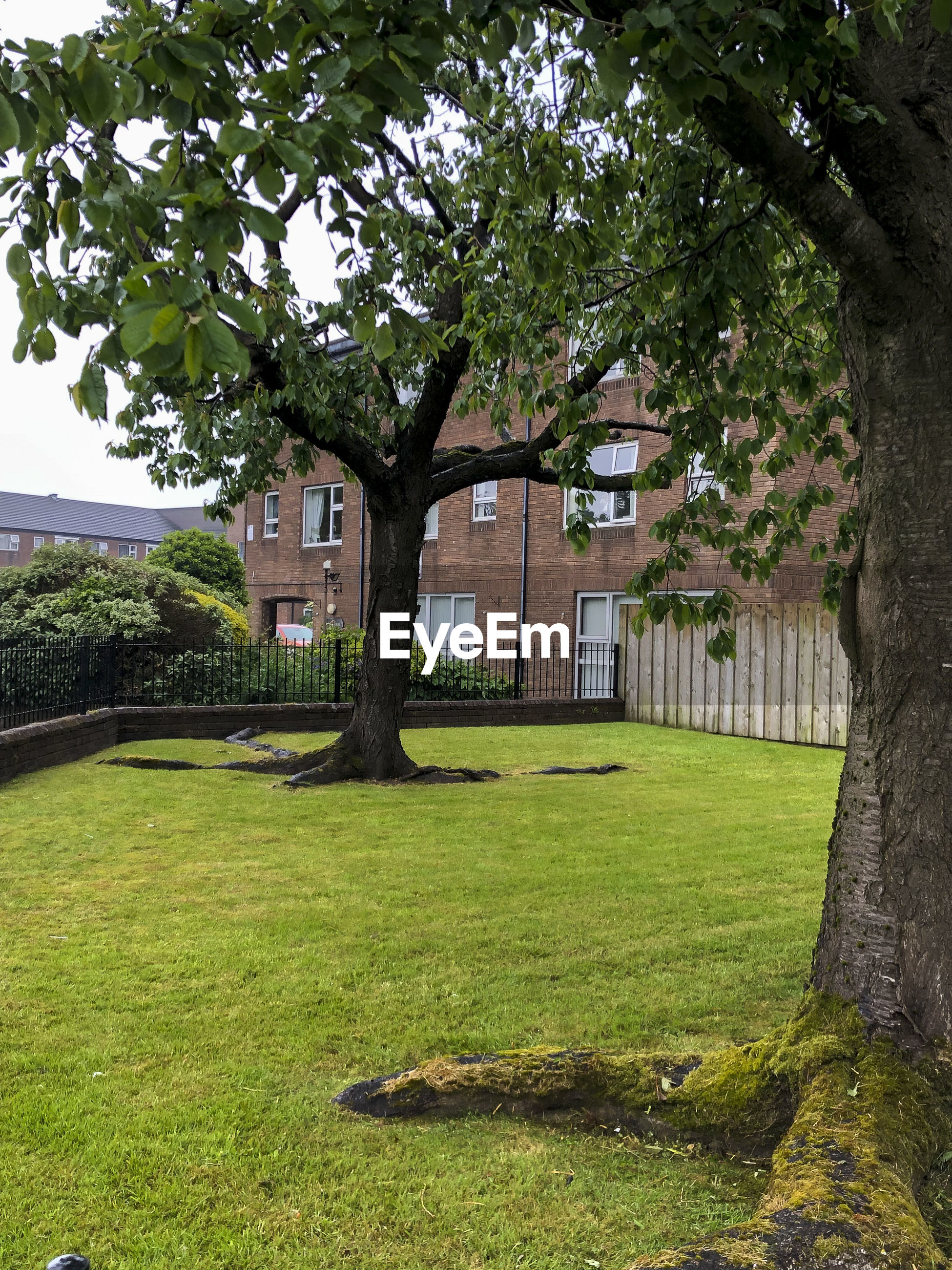 LAWN BY HOUSE ON FIELD AGAINST TREES