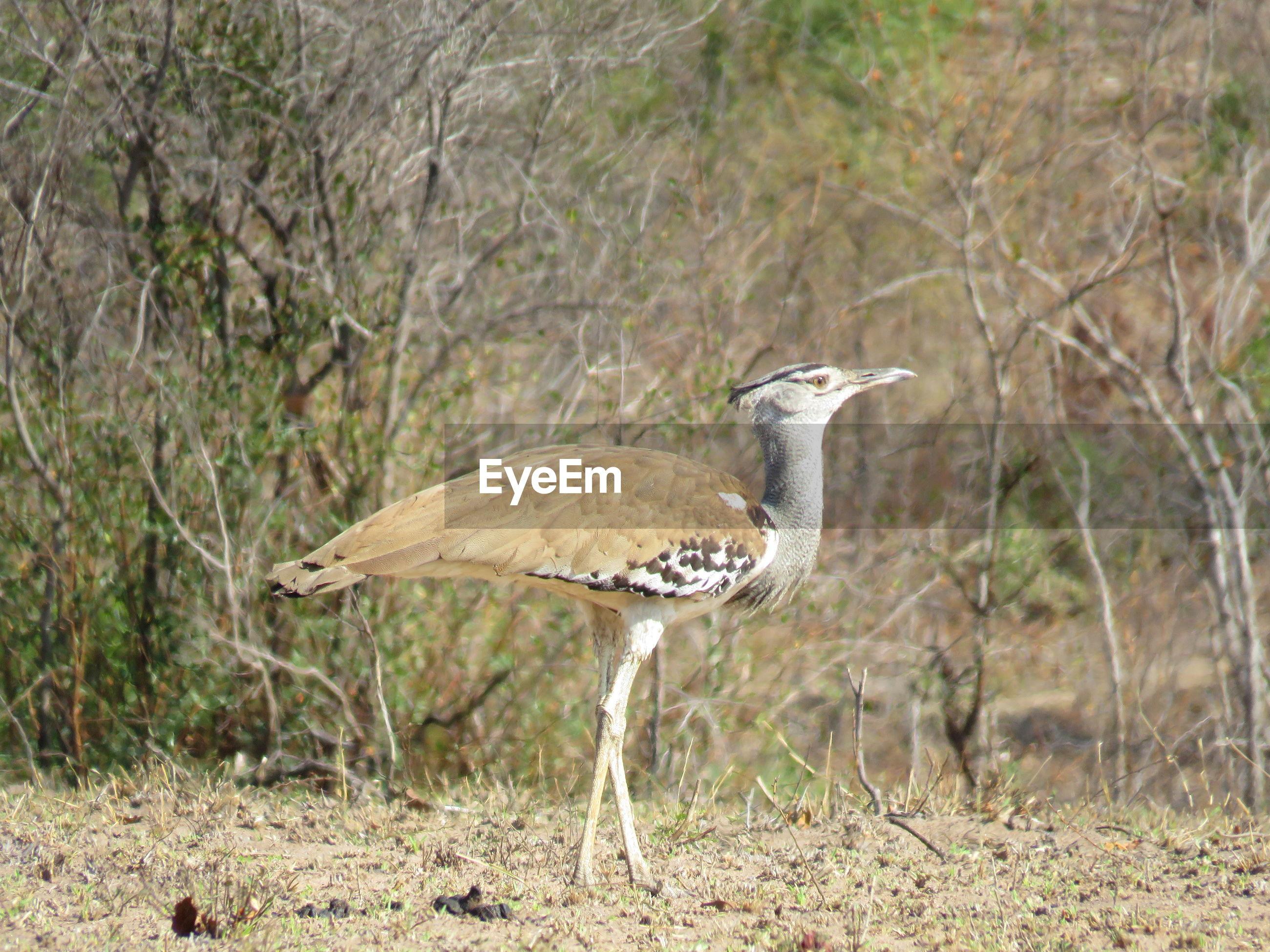 BIRD ON WOOD