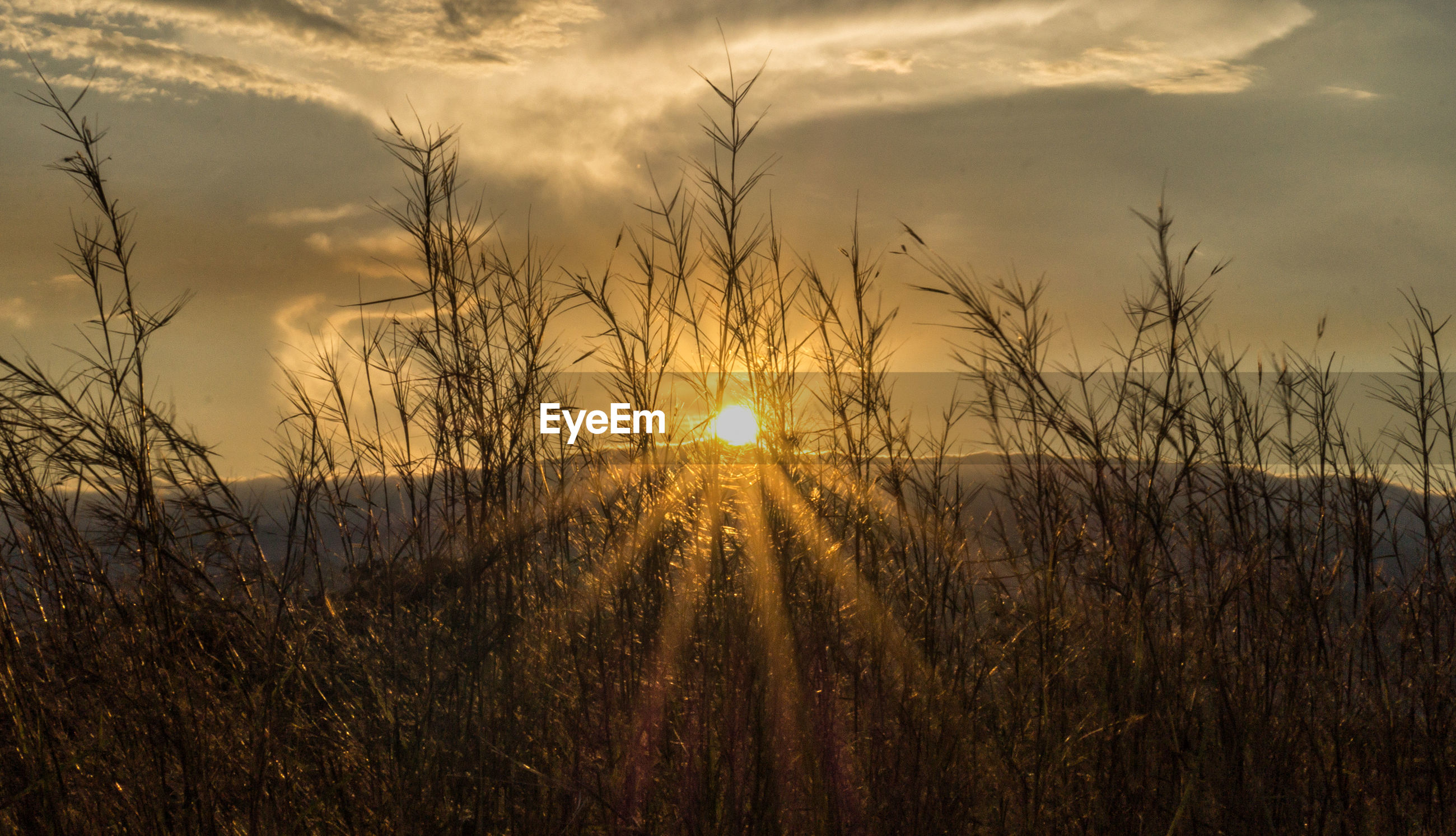 SCENIC VIEW OF SUNSET OVER FIELD