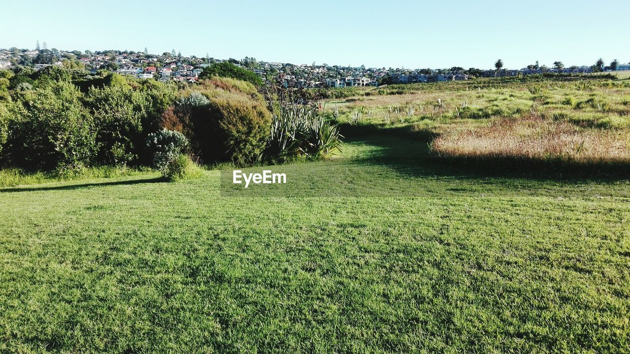 Grassy field by residential district against sky at pakuranga