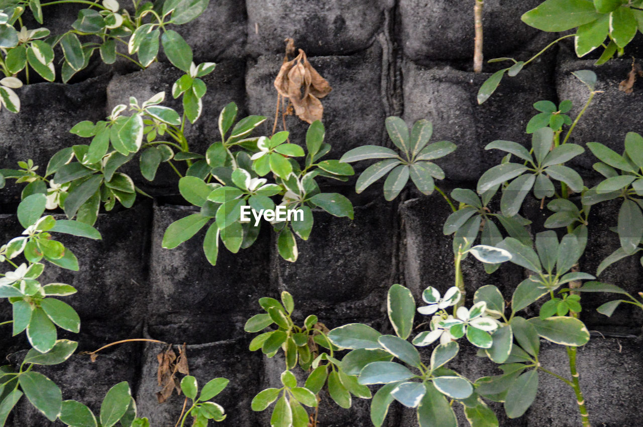 plant, growth, leaf, no people, outdoors, nature, day, animal themes, beauty in nature, flower, freshness, close-up, mammal
