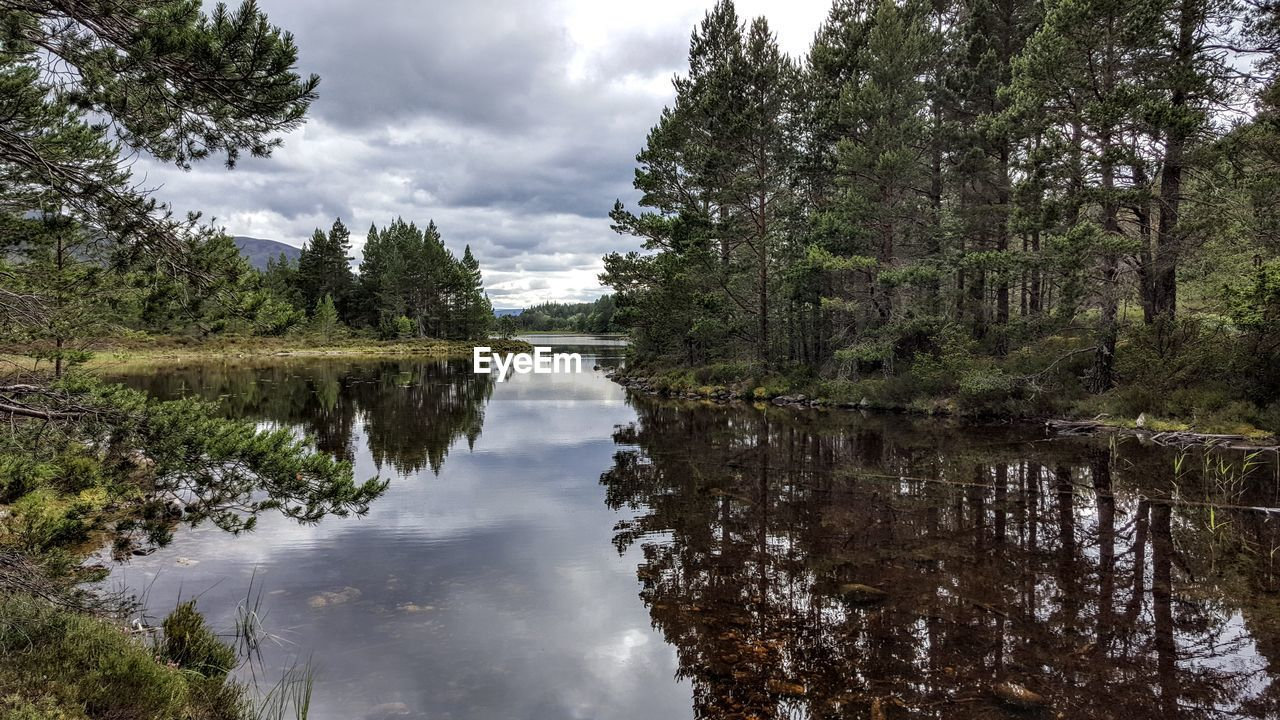 tree, reflection, sky, water, nature, cloud - sky, no people, beauty in nature, outdoors, tranquility, lake, day, tranquil scene, scenics, growth