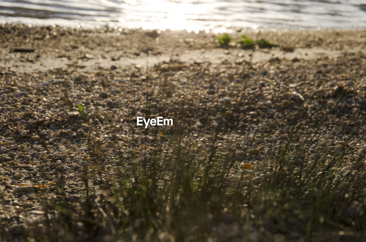 land, growth, nature, selective focus, no people, plant, day, field, water, close-up, beauty in nature, tranquility, outdoors, sunlight, beach, dirt, tranquil scene, scenics - nature, grass, surface level, mud