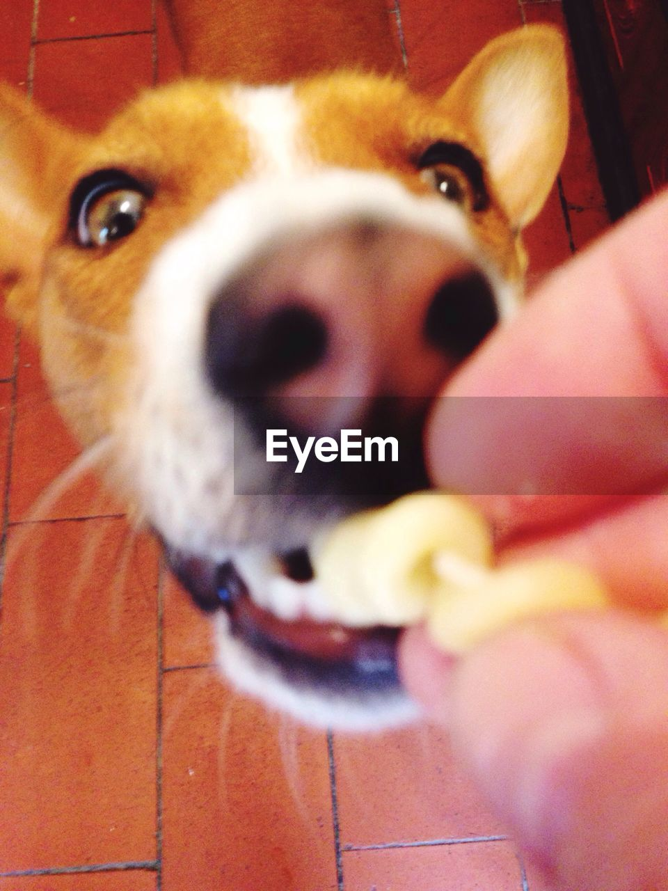pets, one animal, dog, domestic animals, animal themes, human hand, mammal, human body part, real people, one person, holding, unrecognizable person, indoors, personal perspective, close-up, looking at camera, day, people
