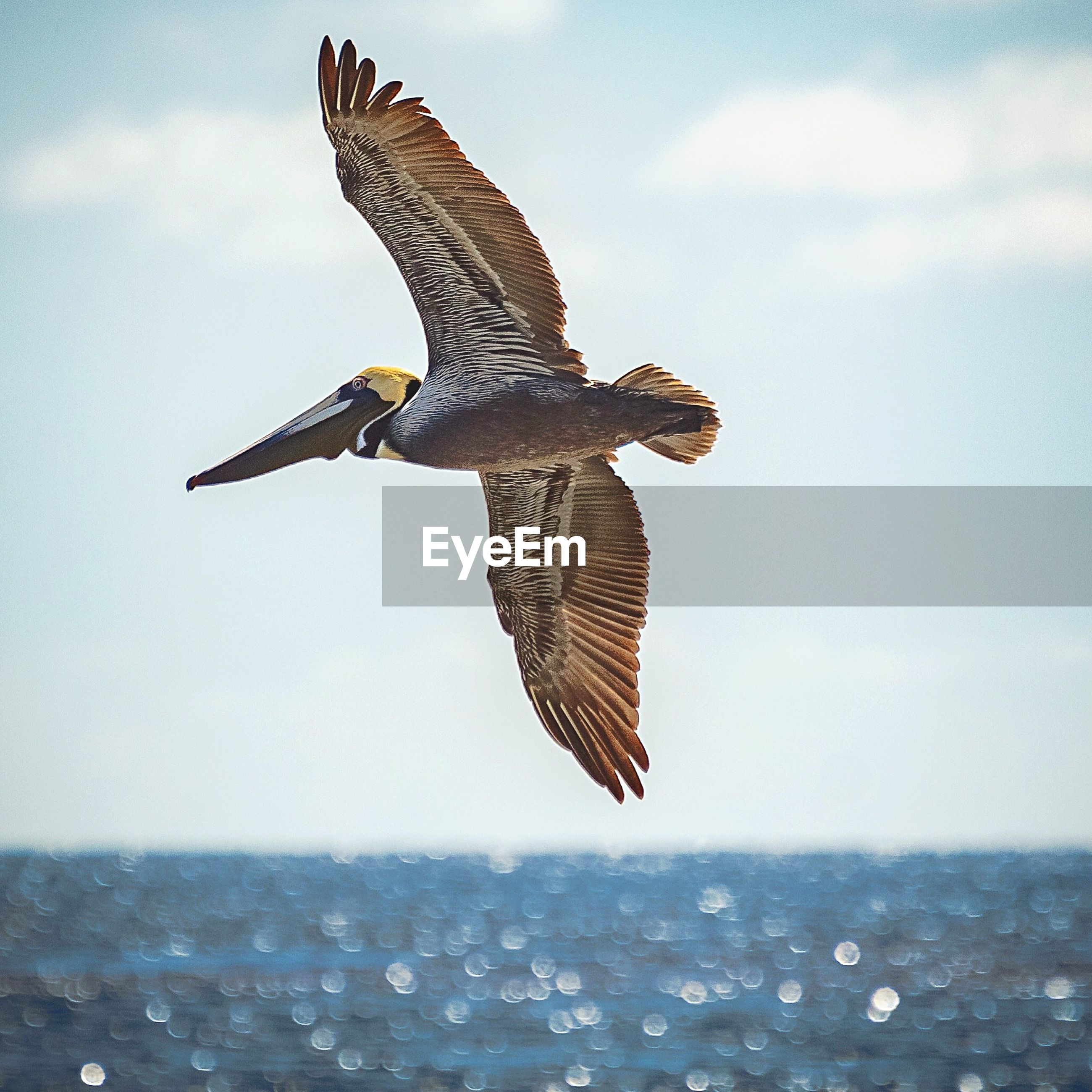 CLOSE-UP OF EAGLE FLYING OVER SEA AGAINST SKY