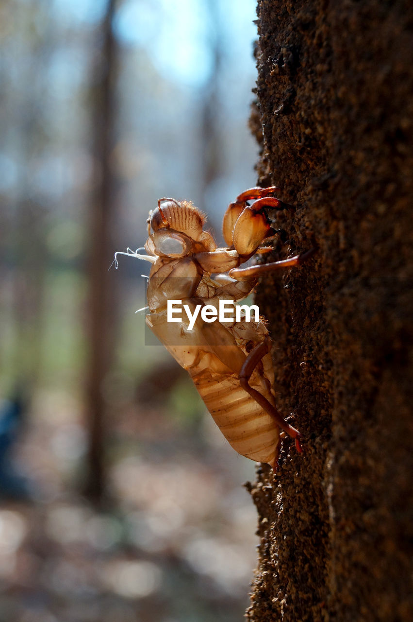 tree trunk, trunk, tree, animals in the wild, plant, animal themes, one animal, animal wildlife, animal, focus on foreground, nature, close-up, day, invertebrate, insect, no people, plant bark, selective focus, outdoors, growth