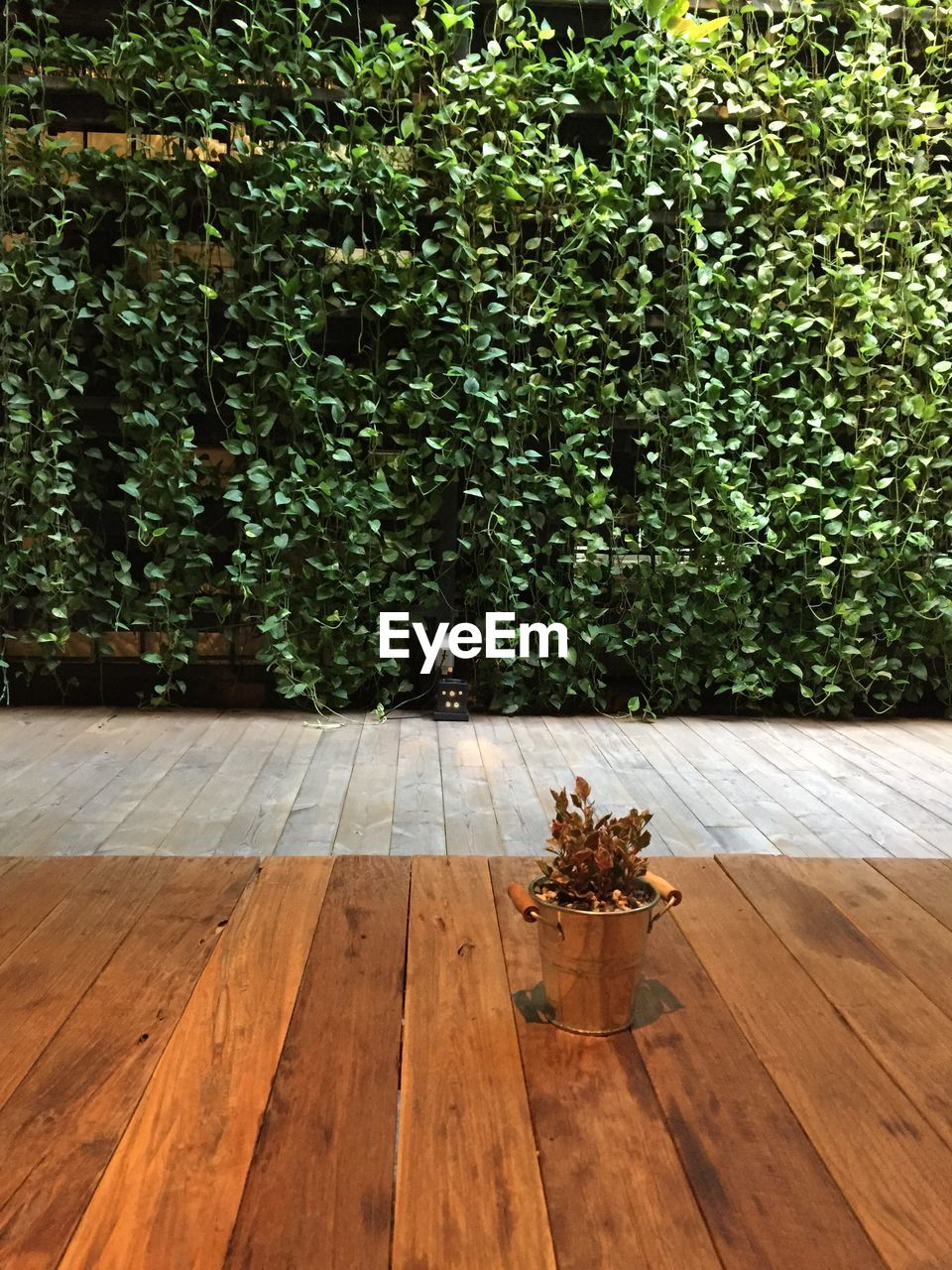TABLE AND TREE BY PLANTS