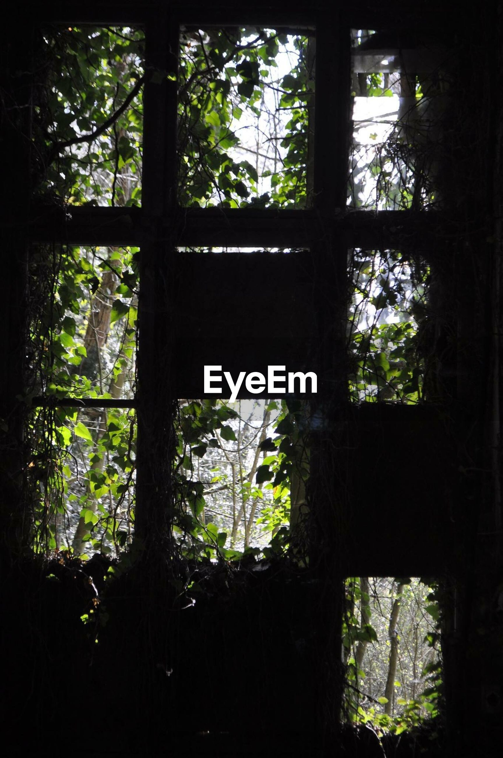 tree, window, indoors, growth, glass - material, transparent, tree trunk, day, transfer print, branch, sunlight, plant, nature, no people, home interior, auto post production filter, dark, looking through window, built structure, silhouette