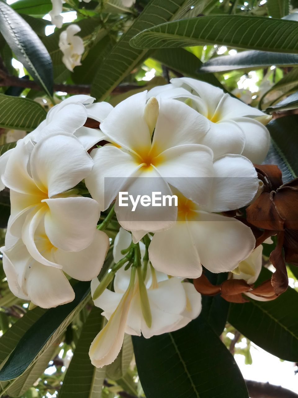 plant, flower, flowering plant, freshness, vulnerability, fragility, beauty in nature, close-up, white color, petal, flower head, growth, nature, inflorescence, day, focus on foreground, outdoors, leaf, plant part, people