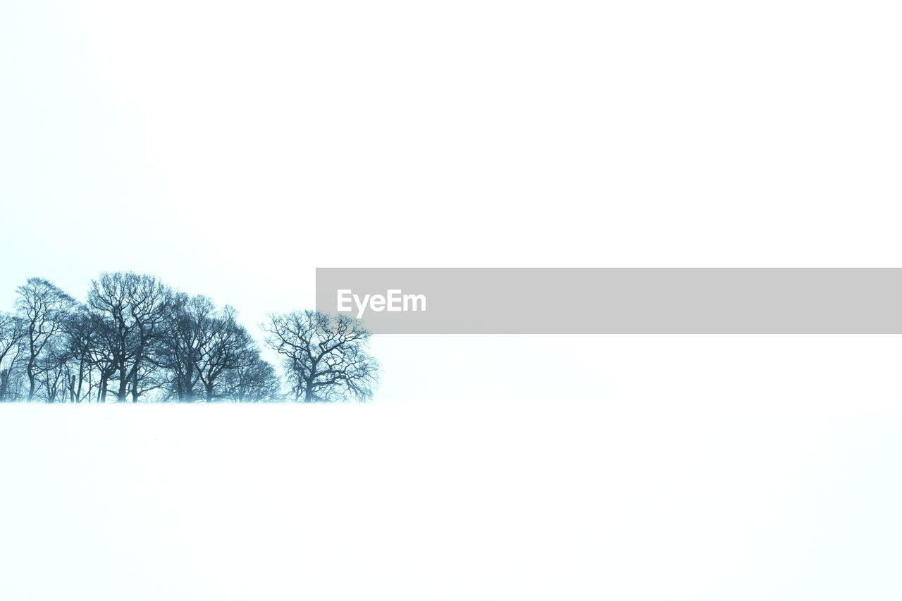 cold temperature, snow, winter, nature, tree, copy space, bare tree, beauty in nature, weather, tranquility, landscape, tranquil scene, scenics, clear sky, outdoors, no people, frozen, day, branch, snowing, white background, sky
