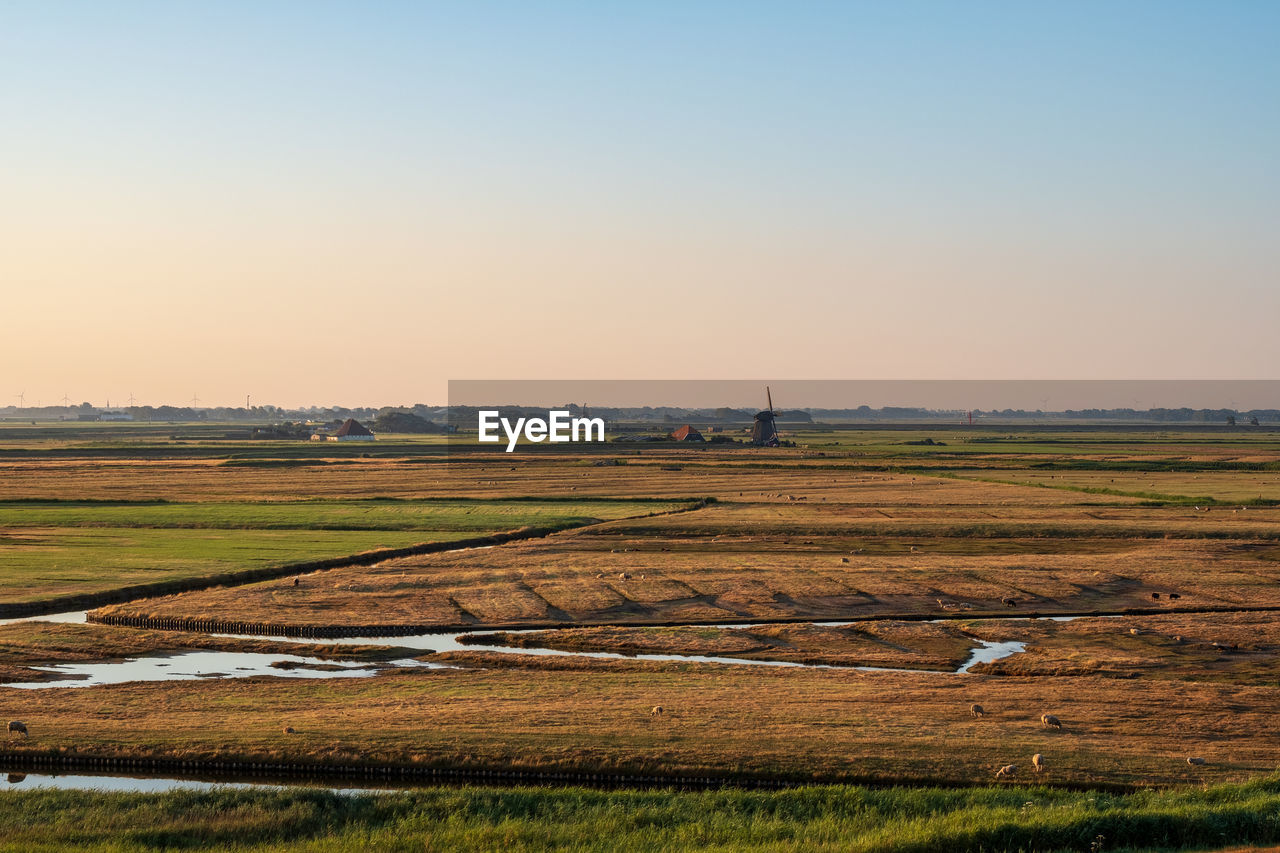sky, landscape, environment, scenics - nature, field, copy space, tranquil scene, beauty in nature, land, tranquility, nature, clear sky, grass, no people, rural scene, sunset, non-urban scene, idyllic, plant, outdoors