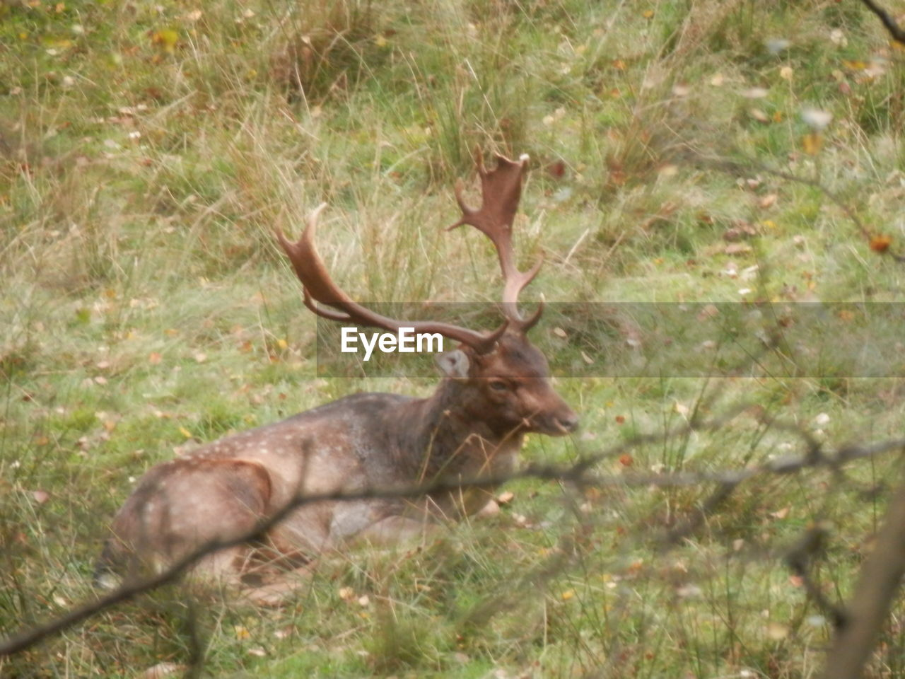 animals in the wild, antler, one animal, animal themes, deer, no people, animal wildlife, nature, mammal, day, tree, outdoors, forest, stag, grass, moose