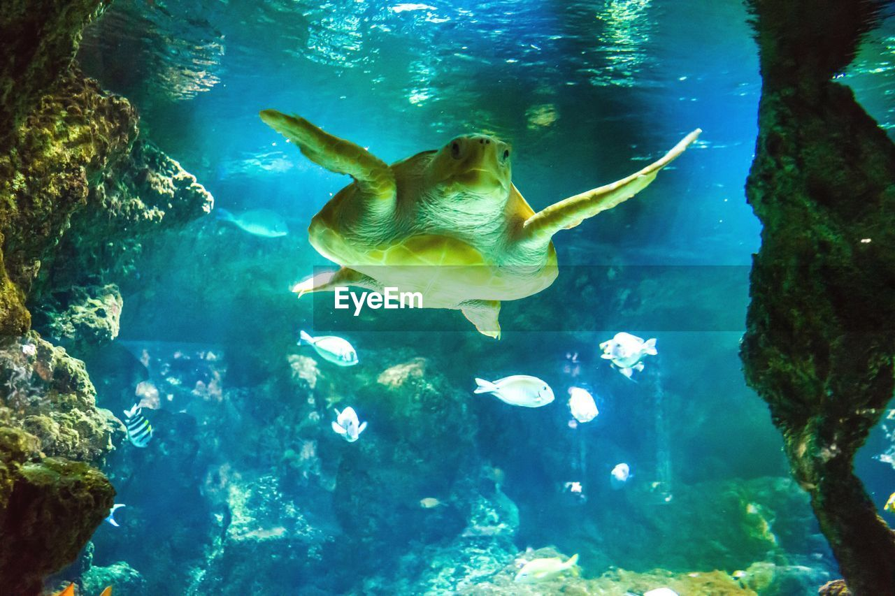 swimming, underwater, animal themes, sea life, undersea, fish, animals in the wild, one animal, water, nature, full length, sea, day, one person, beauty in nature, sea turtle, outdoors, people