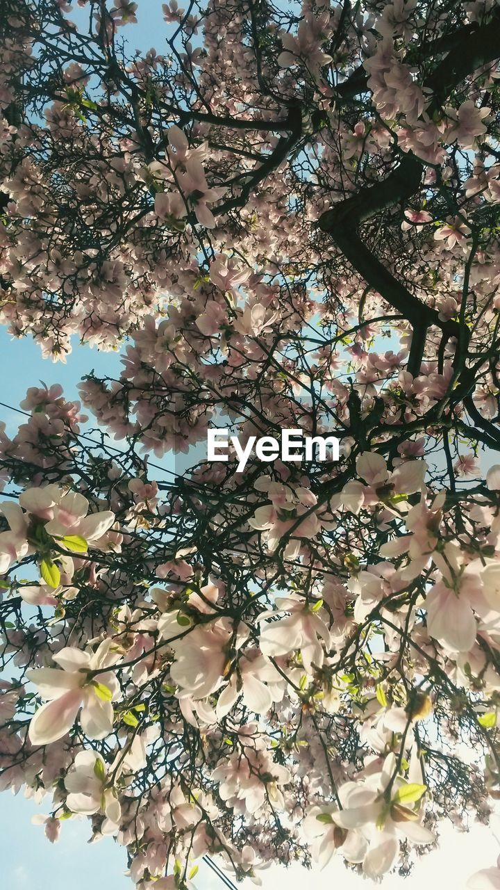 tree, branch, growth, beauty in nature, springtime, nature, flower, blossom, fragility, botany, freshness, day, apple blossom, no people, outdoors, low angle view, backgrounds, close-up, flower head, sky