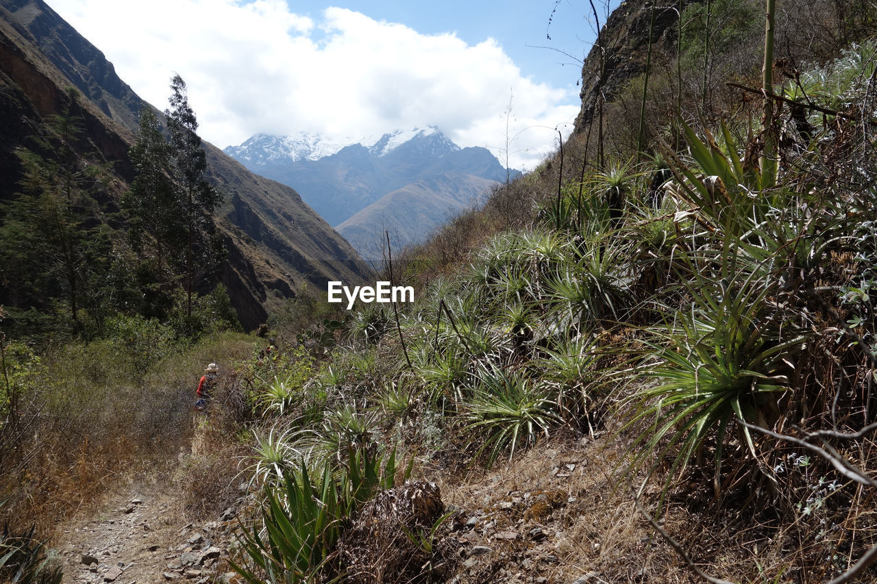 PLANTS GROWING ON LAND AGAINST MOUNTAINS