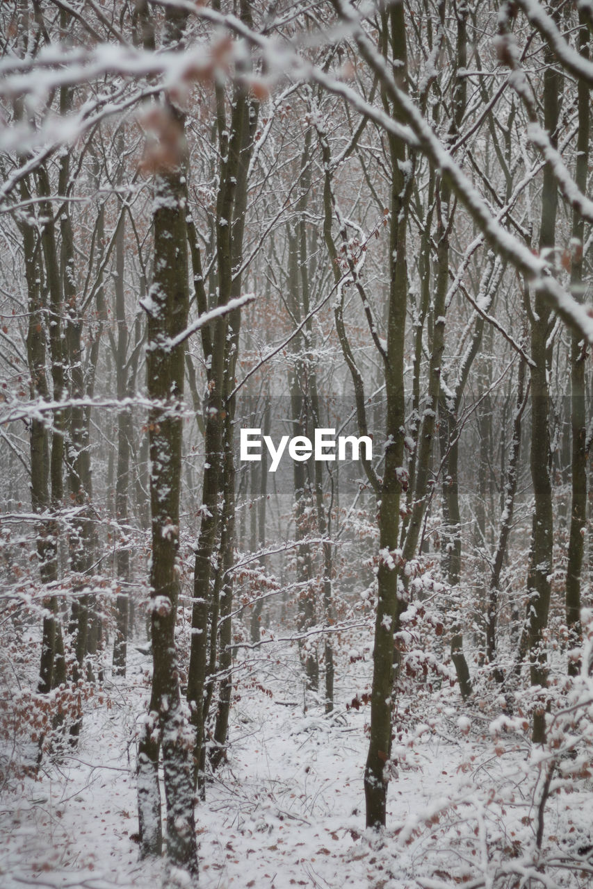 winter, cold temperature, snow, nature, weather, tree, beauty in nature, branch, outdoors, day, frozen, no people, tranquility, snowing, bare tree, snowflake, close-up, bleak