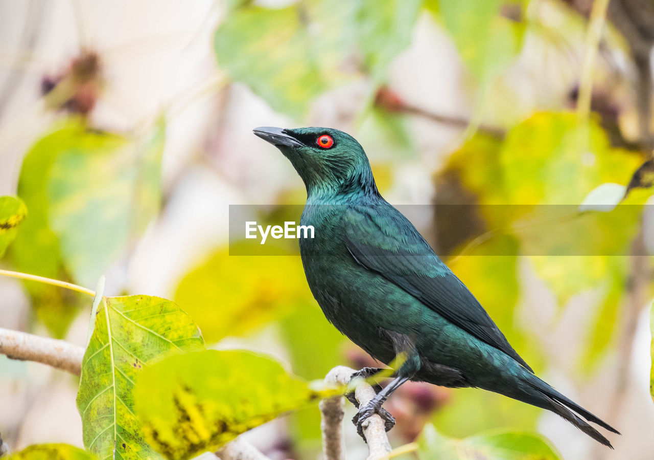 one animal, animals in the wild, bird, perching, animal themes, animal wildlife, focus on foreground, green color, nature, branch, no people, close-up, outdoors, day, leaf, tree, beauty in nature