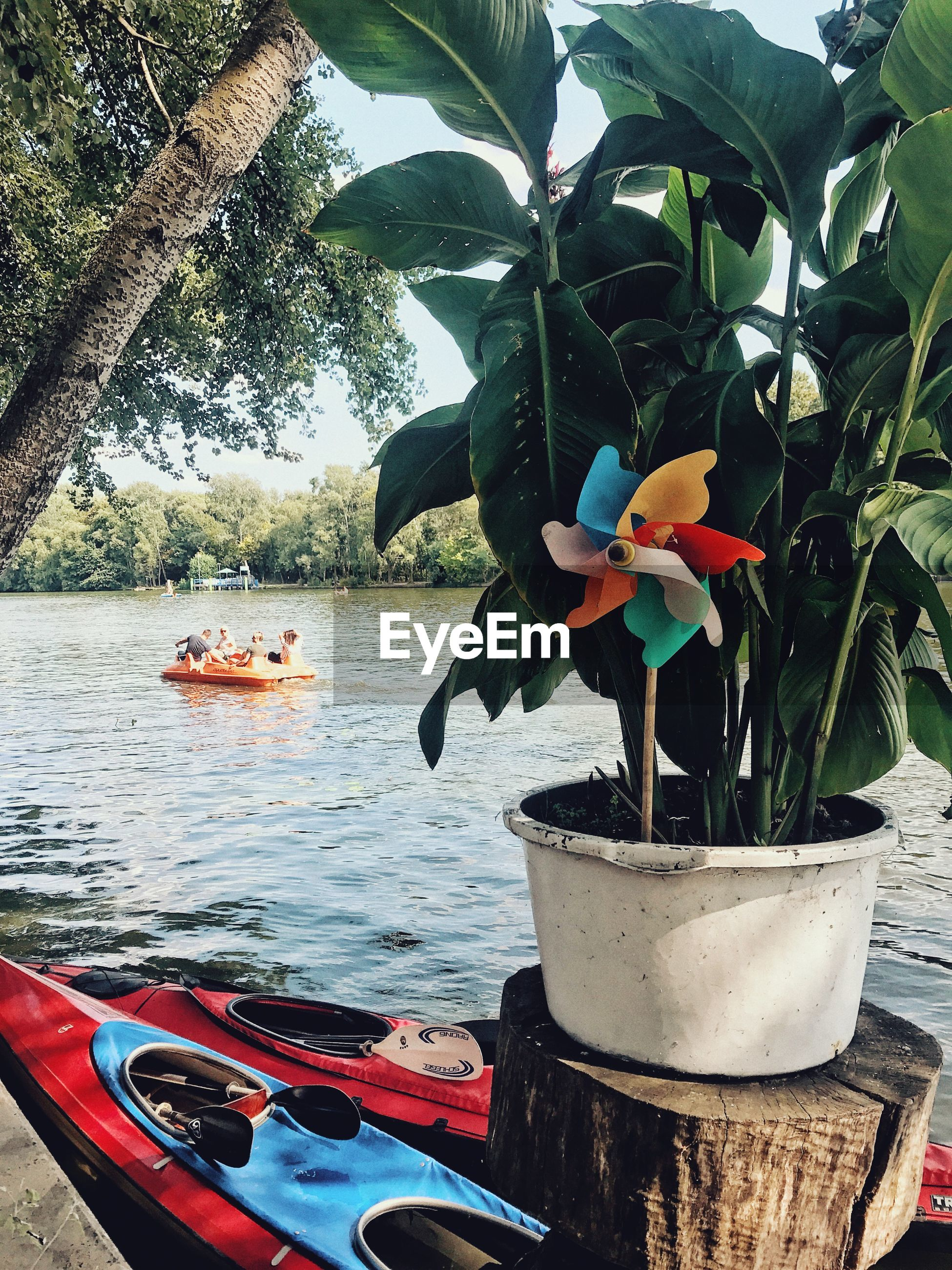 CLOSE-UP OF POTTED PLANTS BY BOAT AGAINST TREES