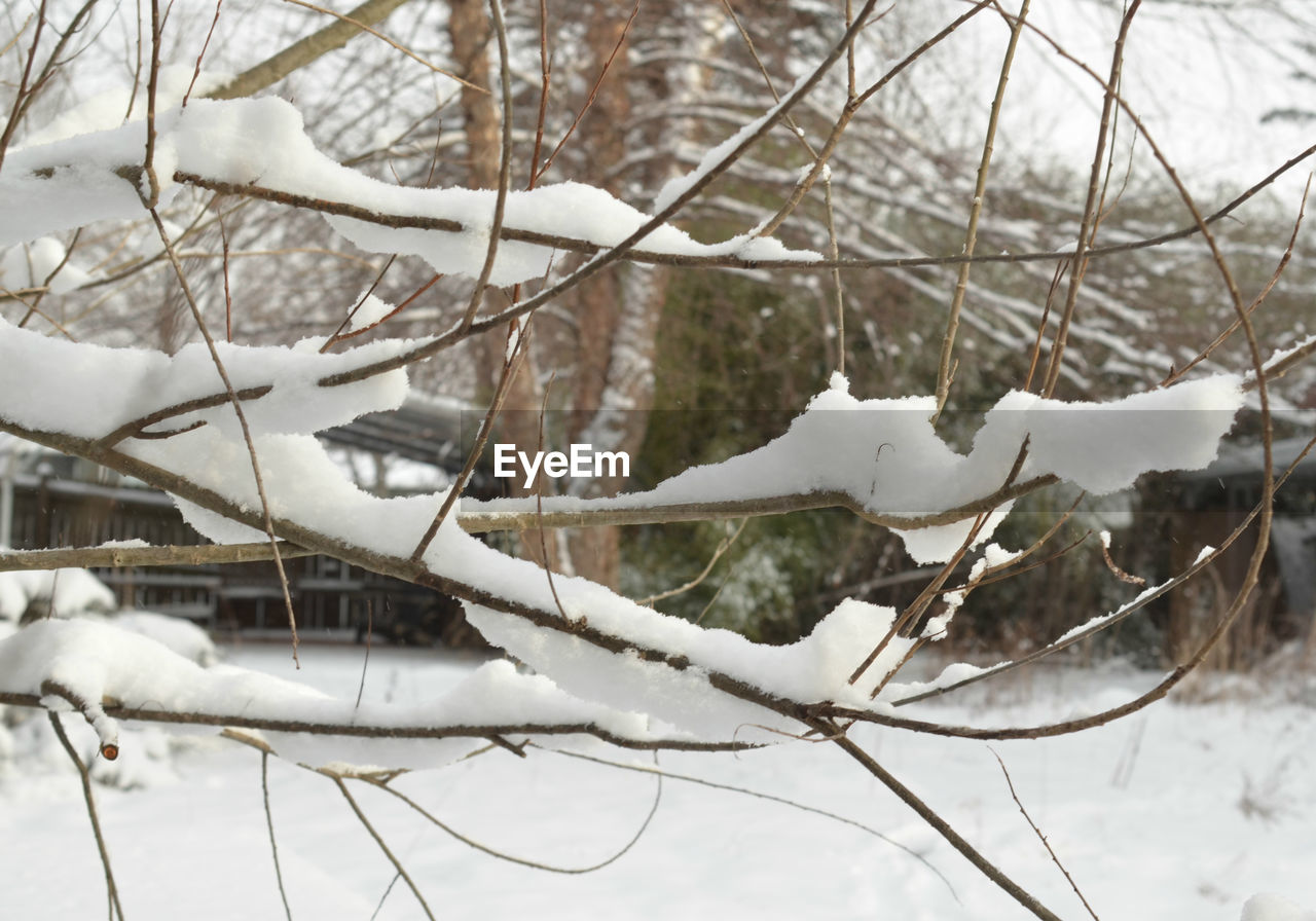winter, cold temperature, snow, branch, bare tree, weather, tree, nature, white color, no people, day, dead plant, outdoors, frozen, antler, beauty in nature, close-up, animal themes