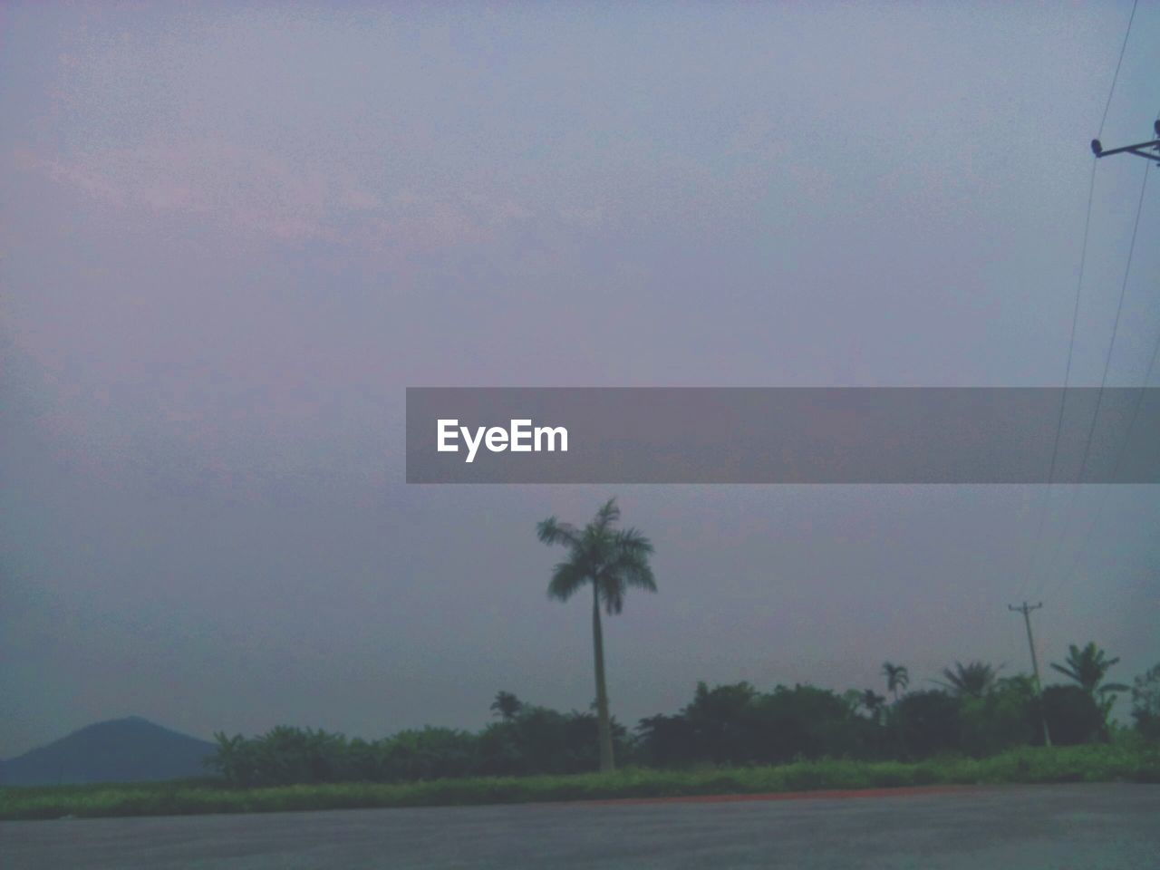 plant, tree, sky, palm tree, tropical climate, nature, beauty in nature, no people, tranquility, growth, land, field, scenics - nature, tranquil scene, outdoors, environment, landscape, dusk, fog, day, coconut palm tree