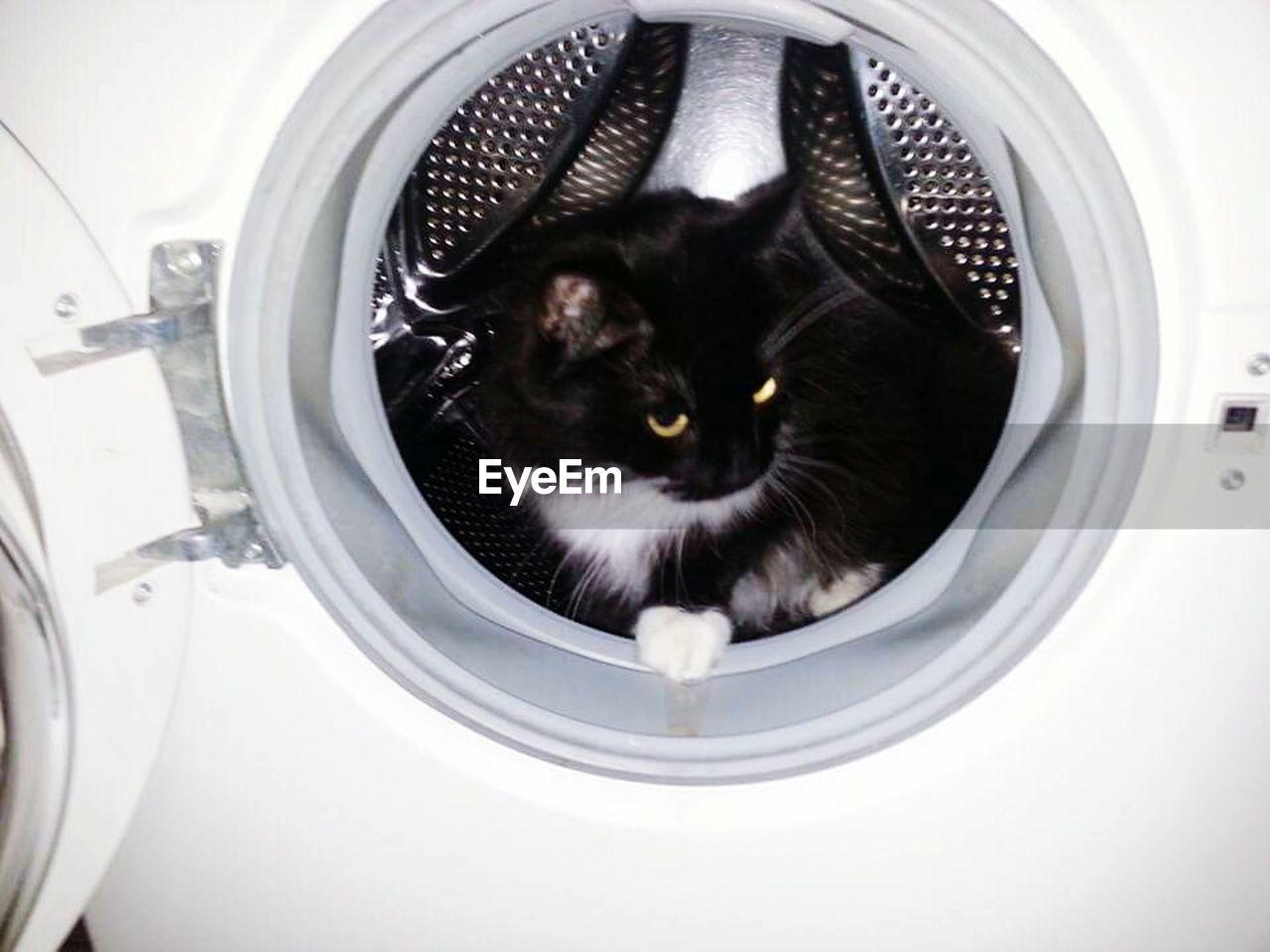 domestic animals, one animal, pets, animal themes, domestic cat, feline, mammal, indoors, washing machine, no people, bathroom, domestic bathroom, whisker, toilet bowl, portrait, close-up, day, flushing toilet