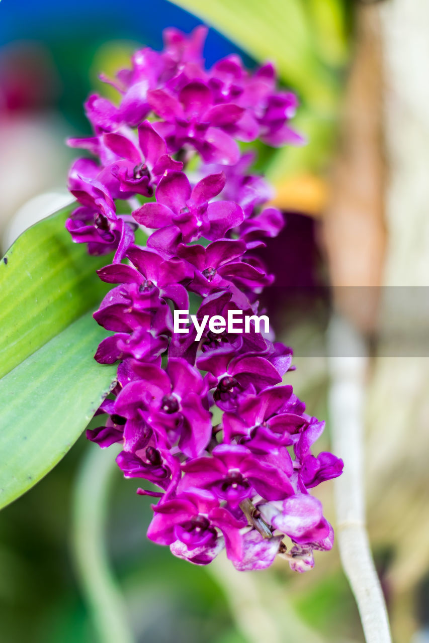 flowering plant, flower, freshness, plant, beauty in nature, vulnerability, fragility, close-up, petal, growth, inflorescence, focus on foreground, flower head, purple, nature, day, pink color, plant part, no people, leaf, springtime, lilac