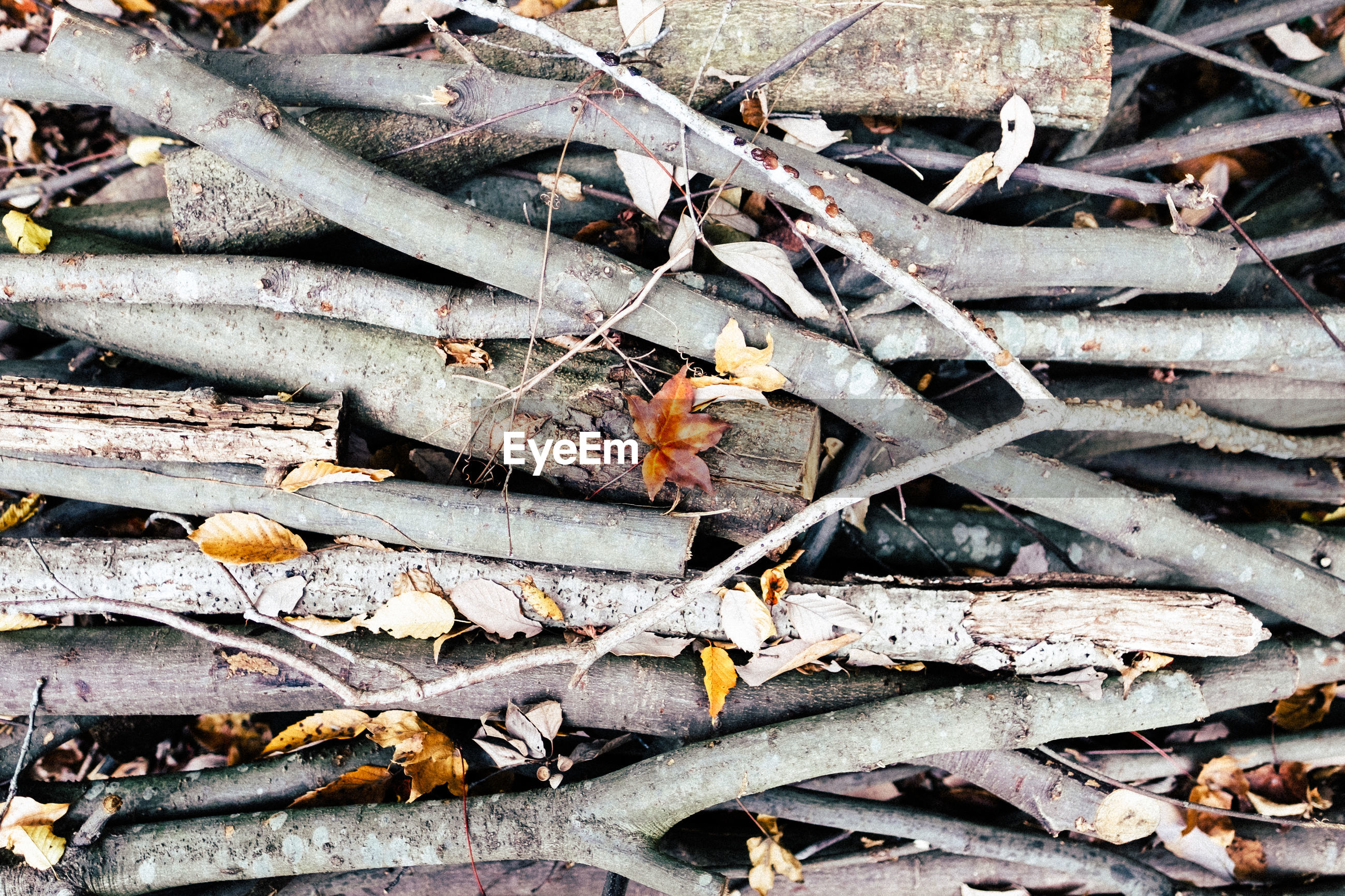 Full frame shot of logs and sticks with autumn leaves