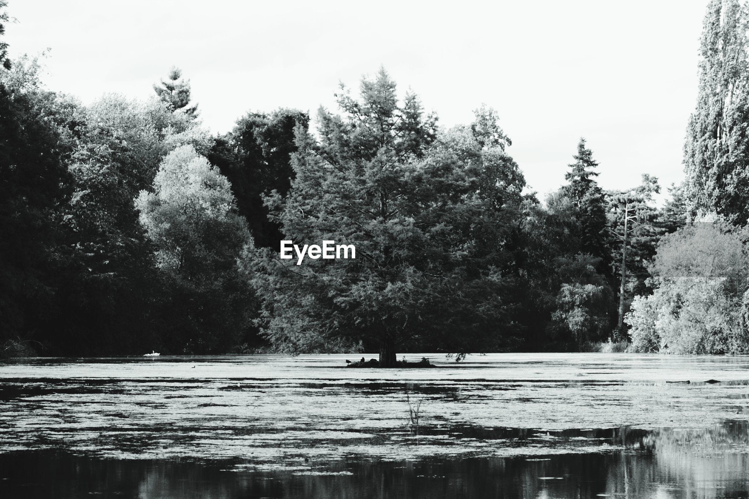 Trees in lake against sky