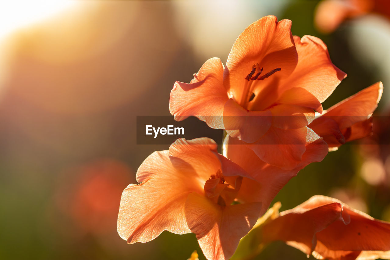 flowering plant, flower, petal, beauty in nature, plant, fragility, close-up, vulnerability, freshness, growth, inflorescence, flower head, focus on foreground, orange color, nature, no people, day, sunlight, outdoors, selective focus