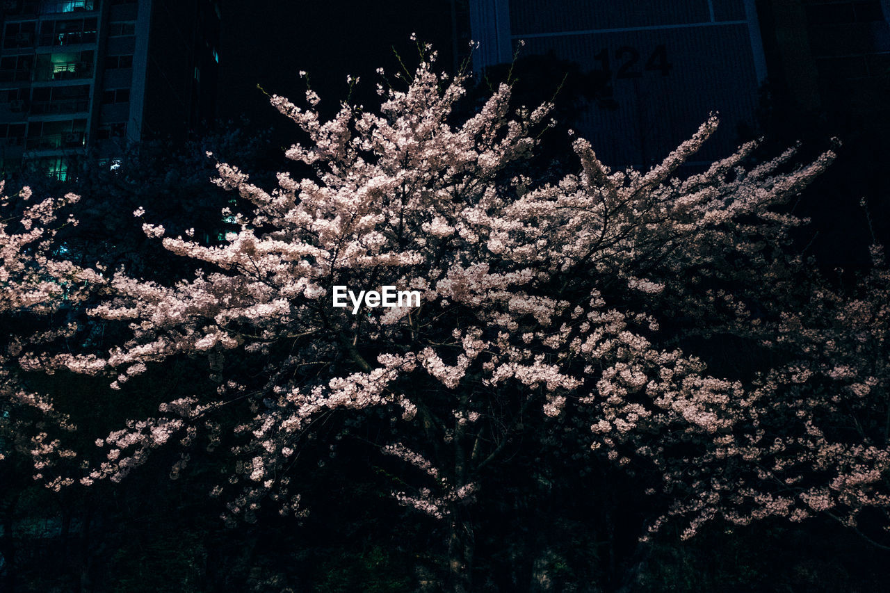 flower, tree, blossom, growth, botany, nature, no people, fragility, branch, beauty in nature, freshness, springtime, night, outdoors, blooming, architecture, flower head, close-up