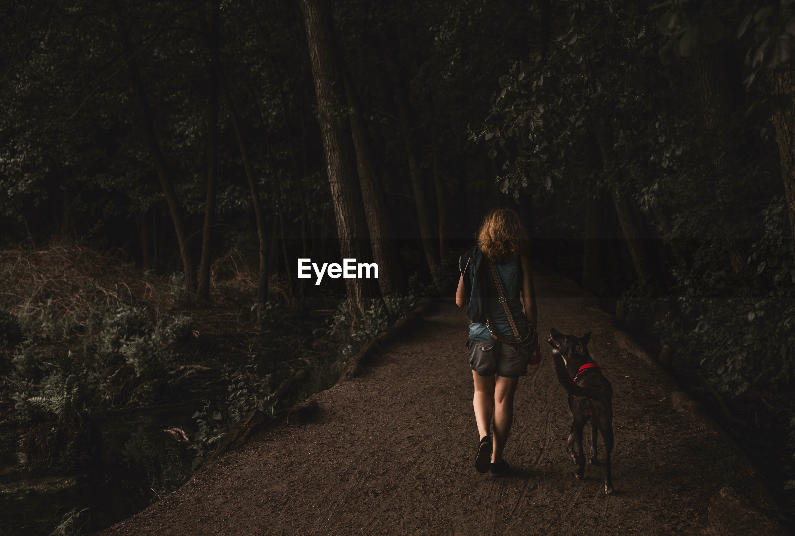 Rear view of woman with dog walking in forest