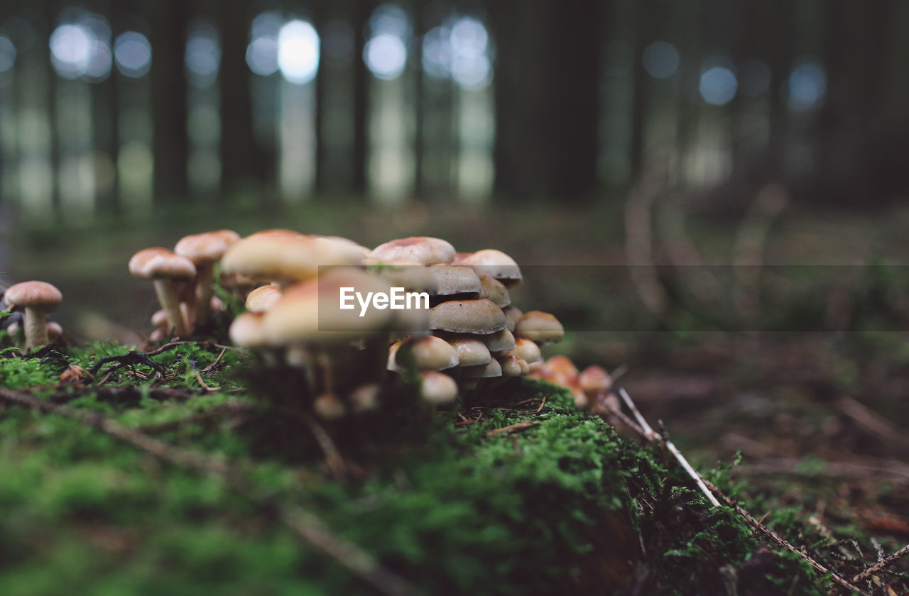 Surface Level Of Mushrooms