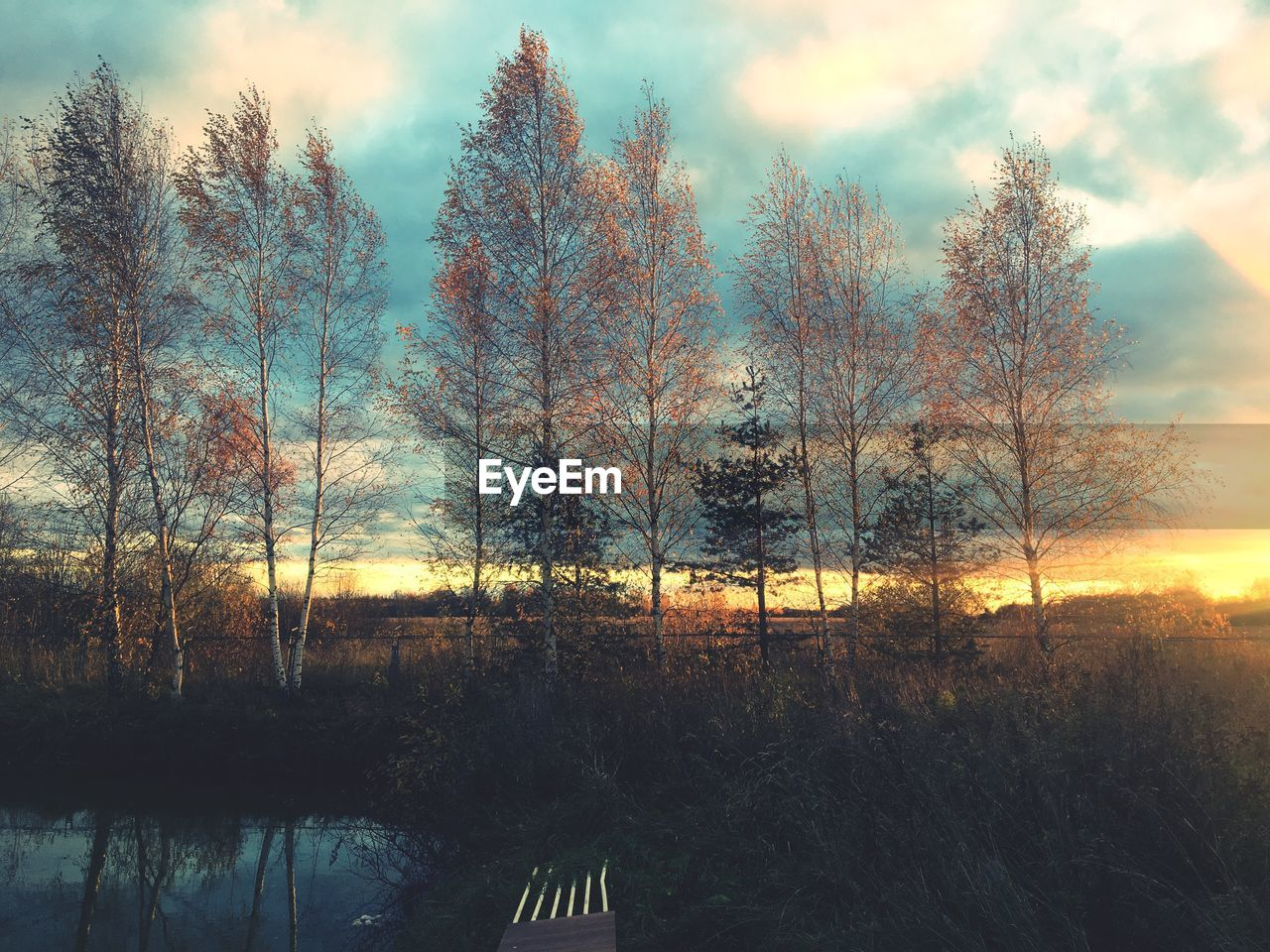 tree, plant, sky, sunset, tranquility, beauty in nature, tranquil scene, scenics - nature, nature, no people, land, forest, cloud - sky, silhouette, non-urban scene, environment, orange color, bare tree, outdoors, landscape