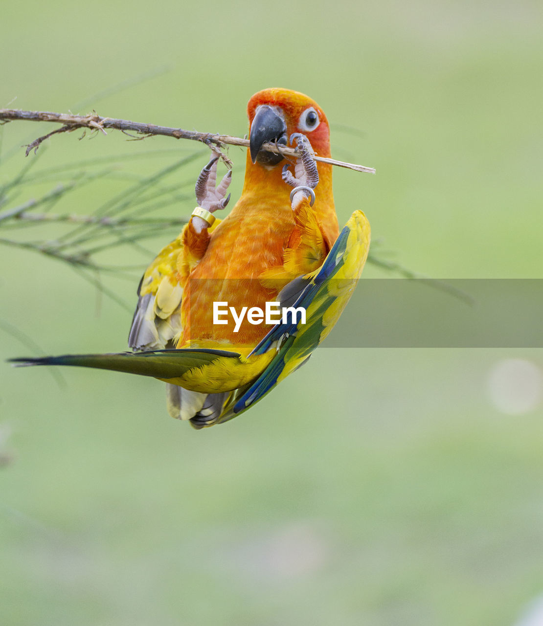 animal themes, animal, bird, animal wildlife, vertebrate, animals in the wild, one animal, perching, parrot, focus on foreground, no people, yellow, day, close-up, nature, outdoors, beauty in nature, orange color, macaw, multi colored