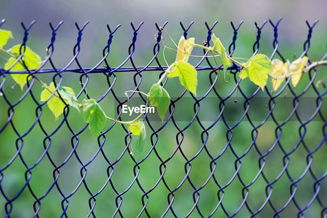 fence, security, boundary, protection, safety, barrier, chainlink fence, metal, no people, day, close-up, nature, green color, focus on foreground, sky, outdoors, pattern, plant, field, clear sky