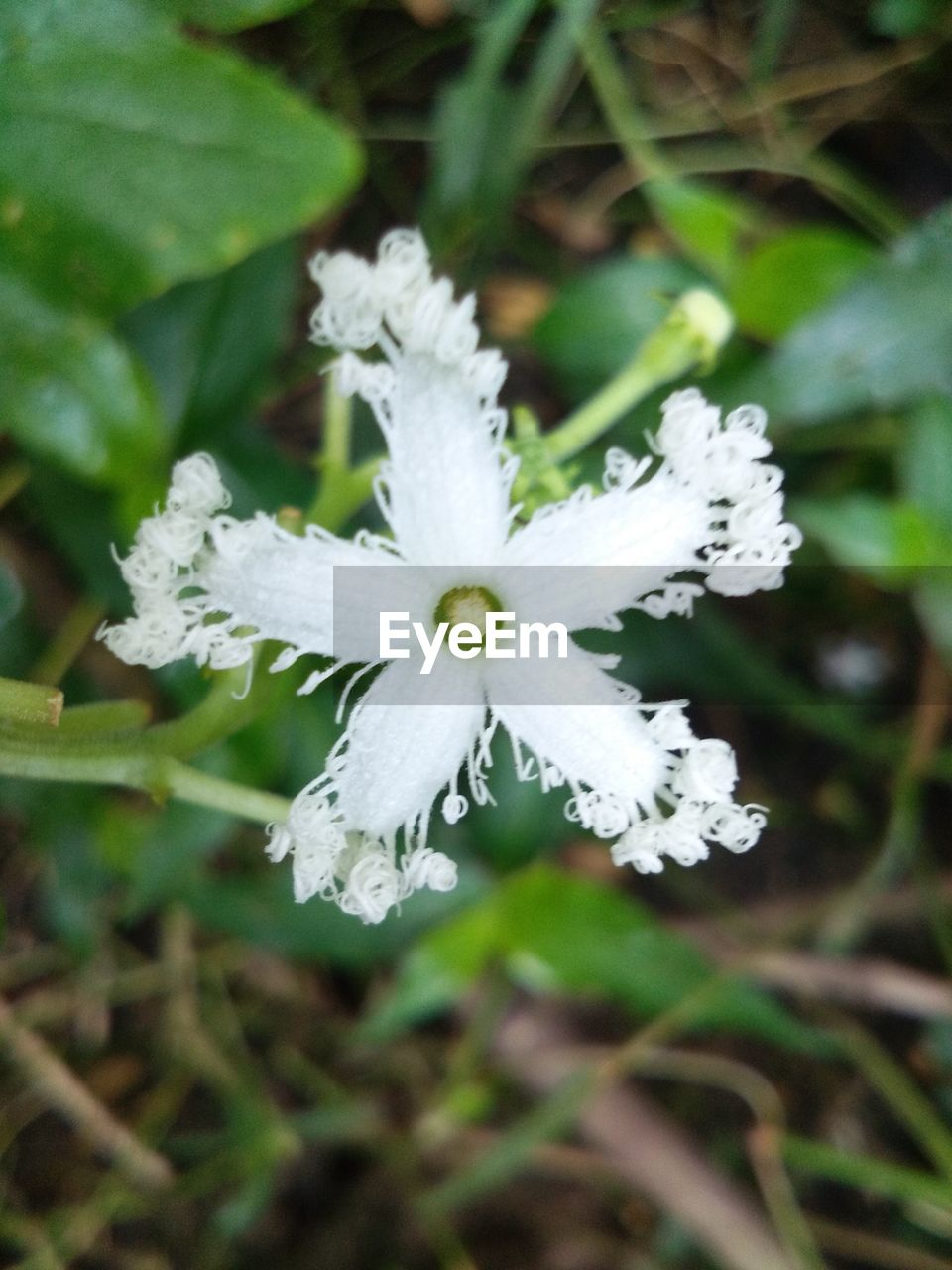 plant, flower, flowering plant, beauty in nature, freshness, close-up, vulnerability, growth, fragility, inflorescence, white color, flower head, nature, petal, focus on foreground, no people, day, outdoors, land