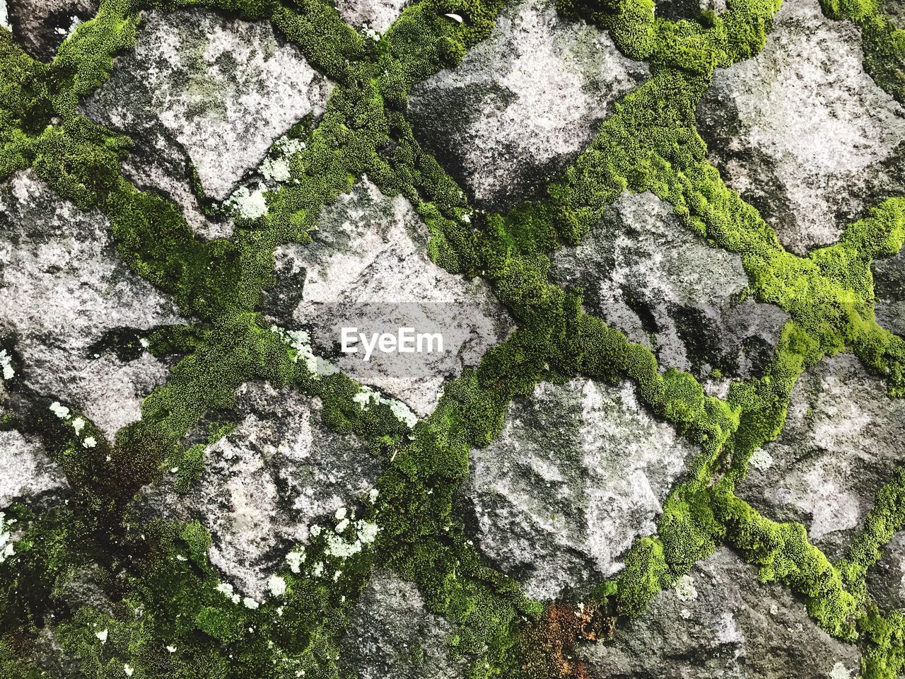 rock - object, day, outdoors, no people, green color, moss, high angle view, nature, textured, full frame, close-up
