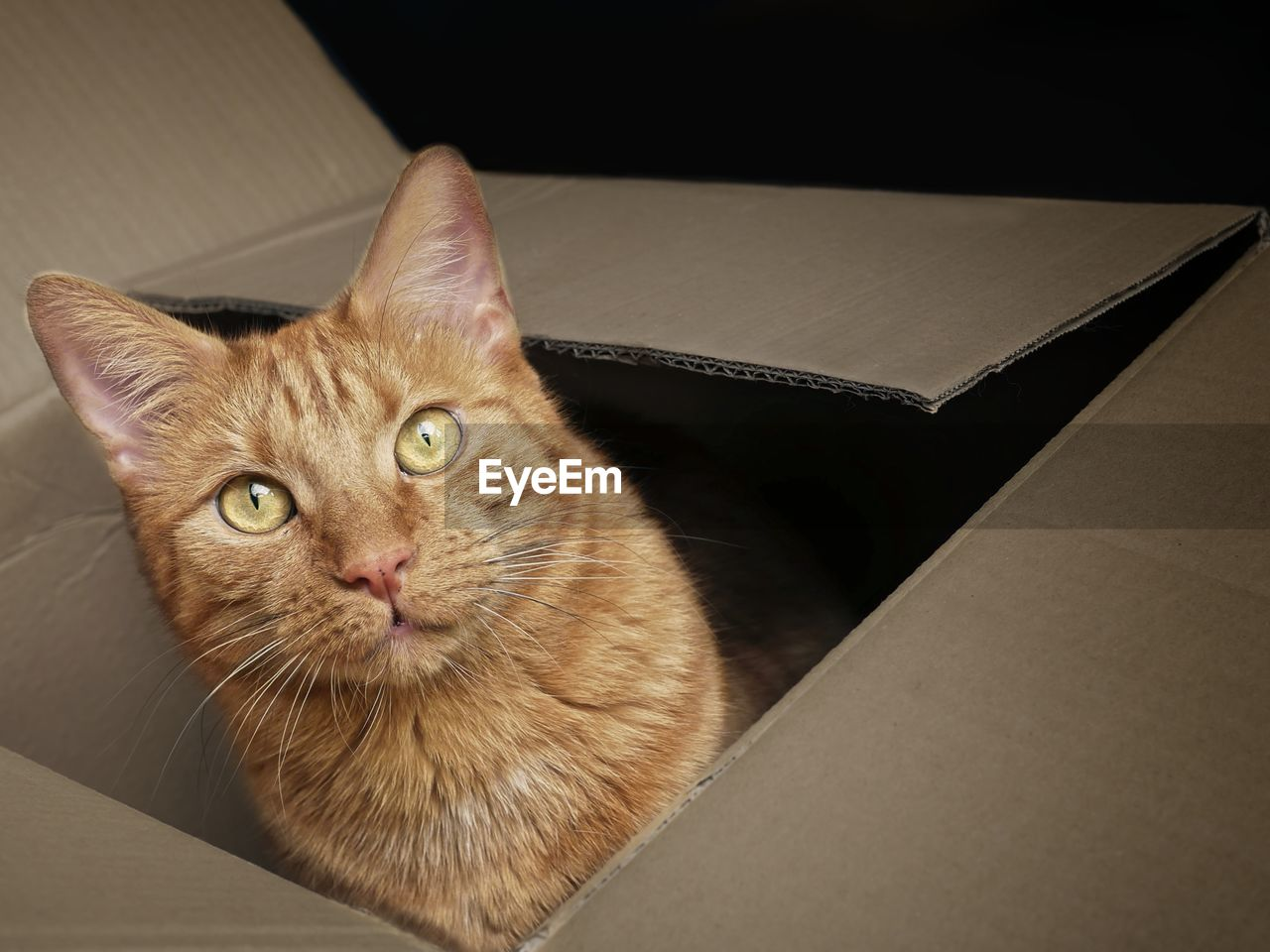 cat, feline, domestic cat, domestic, pets, domestic animals, animal themes, mammal, animal, portrait, looking at camera, indoors, one animal, vertebrate, no people, box, box - container, whisker, high angle view, container, animal head, animal eye, ginger cat