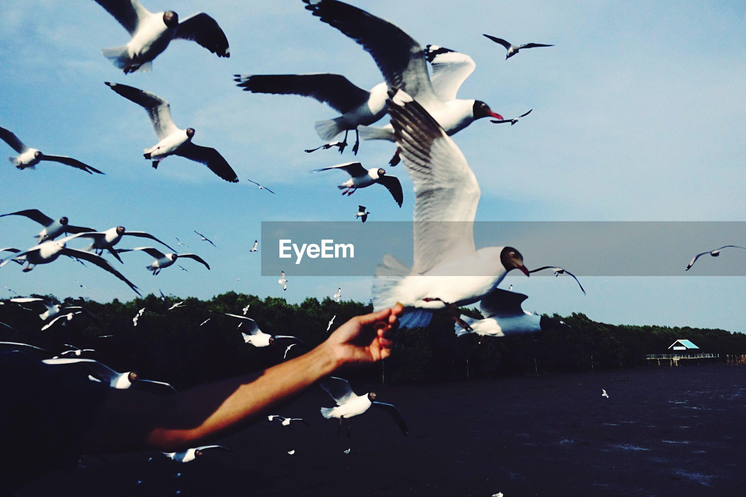 Seagulls flying against sky