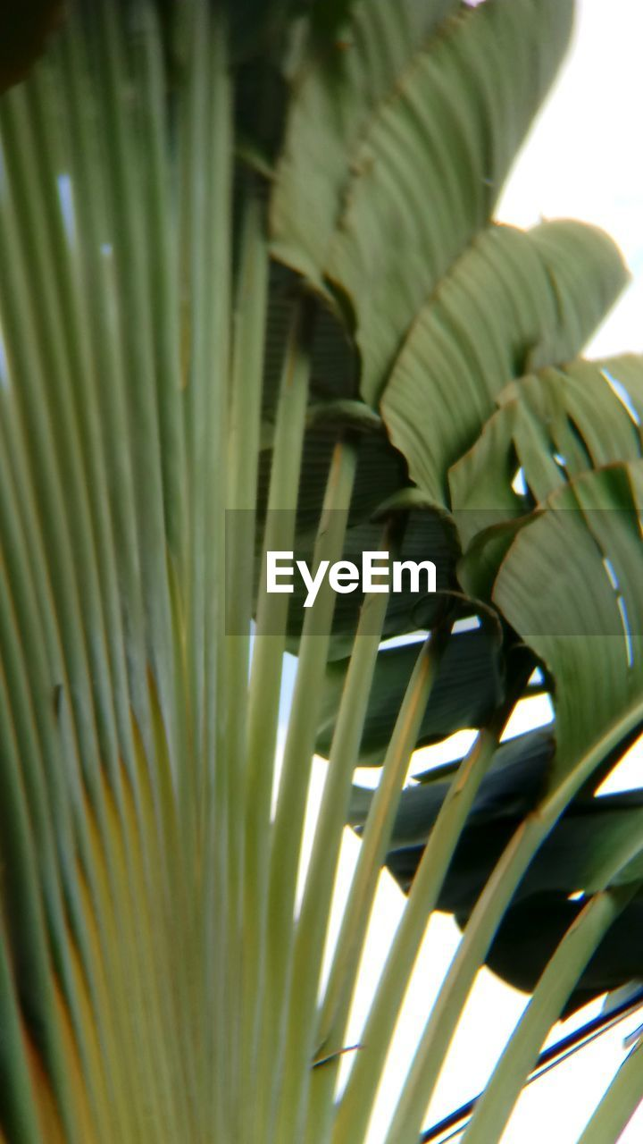 green color, growth, close-up, no people, day, nature, outdoors, freshness