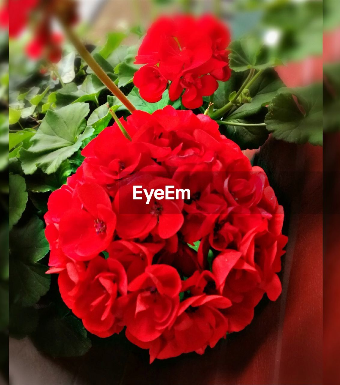 flower, red, beauty in nature, petal, fragility, growth, nature, freshness, flower head, plant, no people, close-up, blooming, day, outdoors