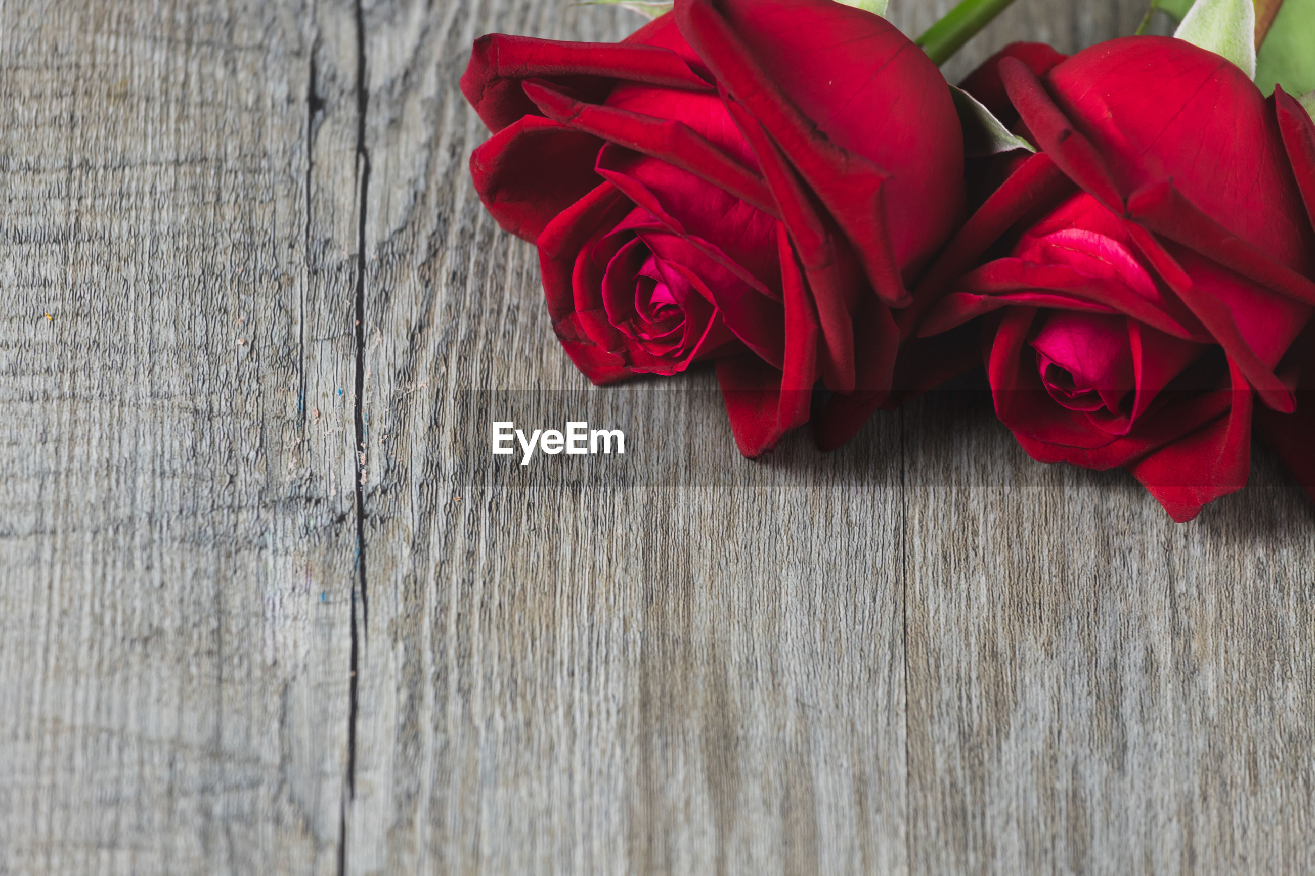 Red rose placed on a gray wooden floor, valentine's day theme