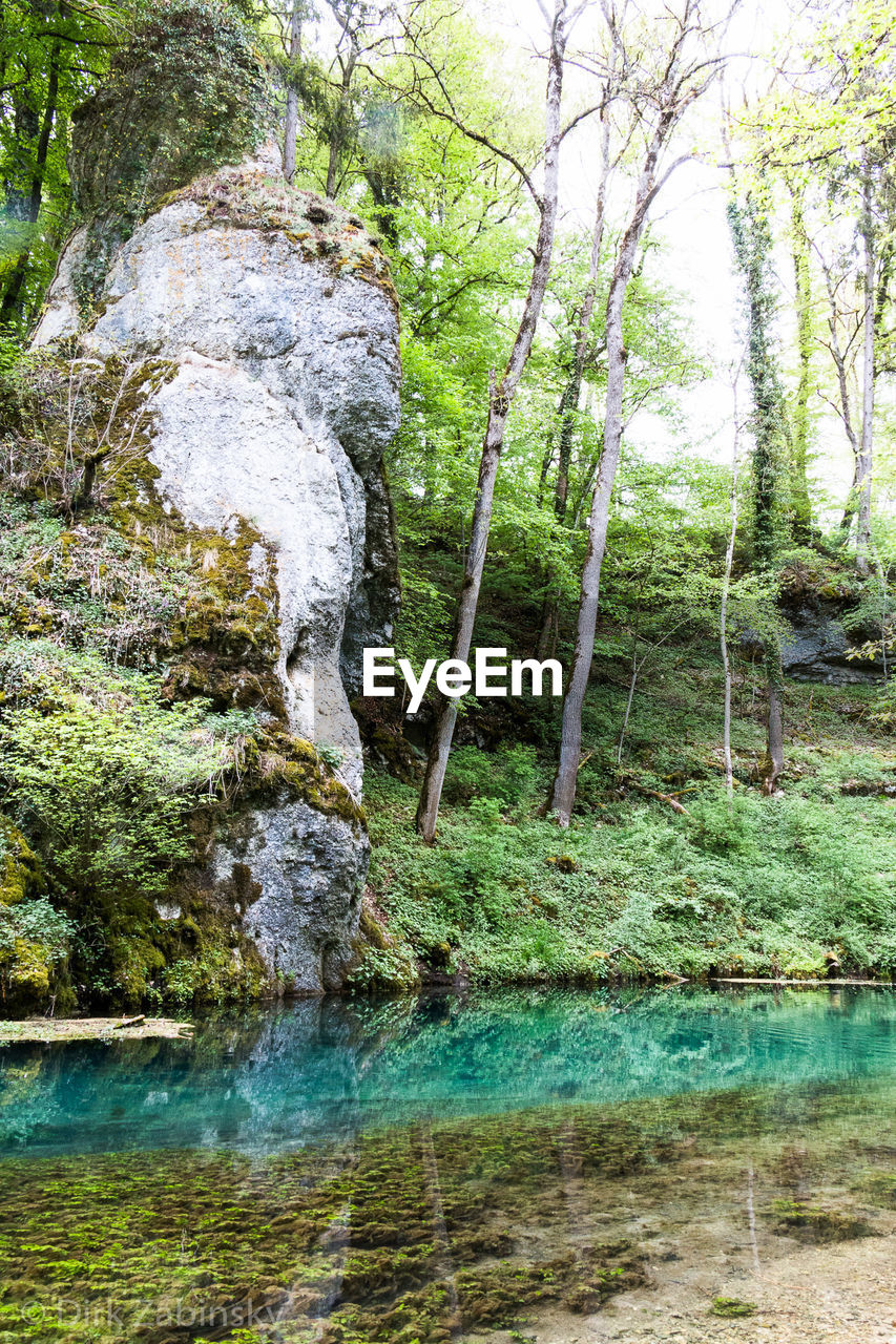 tree, plant, water, forest, tranquility, land, nature, beauty in nature, growth, day, tranquil scene, no people, scenics - nature, green color, tree trunk, trunk, non-urban scene, rock, outdoors, woodland, flowing water, flowing