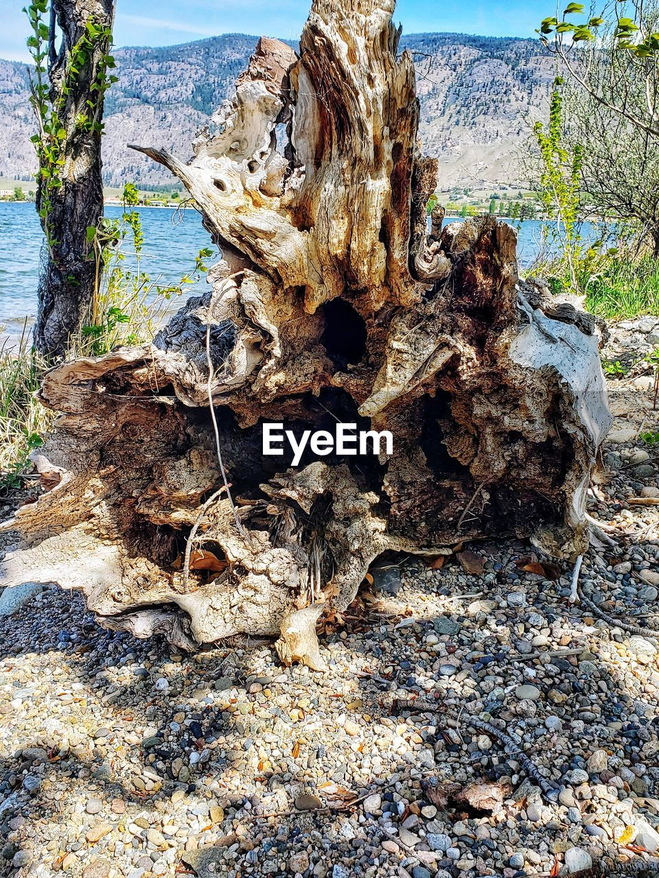 tree, land, nature, day, plant, no people, wood - material, tree trunk, trunk, sunlight, growth, tranquility, field, bark, textured, outdoors, tree stump, dead plant, forest, beach