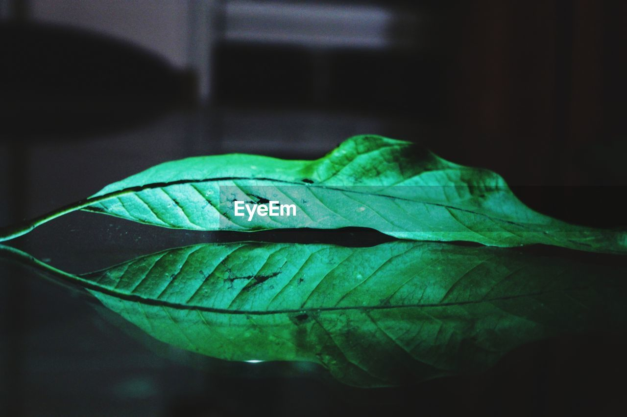 leaf, green color, nature, water, close-up, drop, fragility, no people, growth, day, beauty in nature, outdoors, freshness, plant