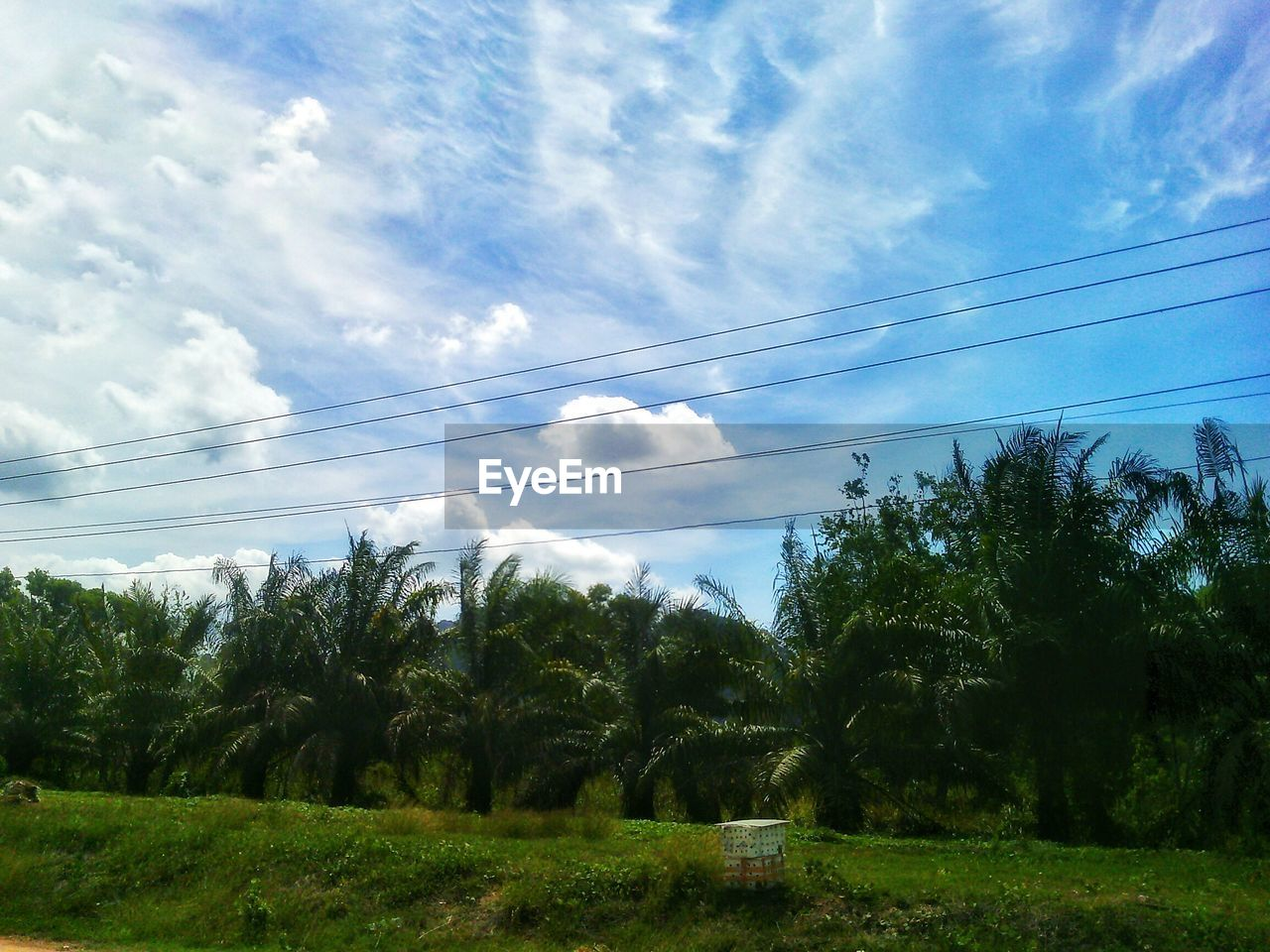 tree, sky, cloud - sky, cable, day, no people, outdoors, power line, nature, low angle view, growth, scenics, tranquility, landscape, beauty in nature, electricity