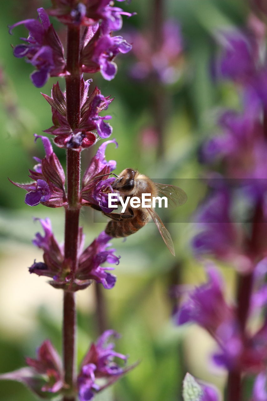 flowering plant, flower, plant, fragility, beauty in nature, vulnerability, animal themes, animal, one animal, freshness, growth, petal, animals in the wild, purple, insect, bee, invertebrate, animal wildlife, flower head, close-up, pollination, no people, outdoors, bumblebee