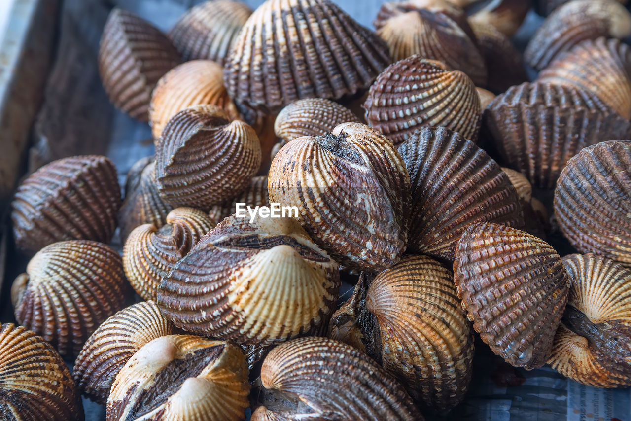clam, seashell, no people, seafood, day, food and drink, food, large group of objects, outdoors, backgrounds, close-up, freshness